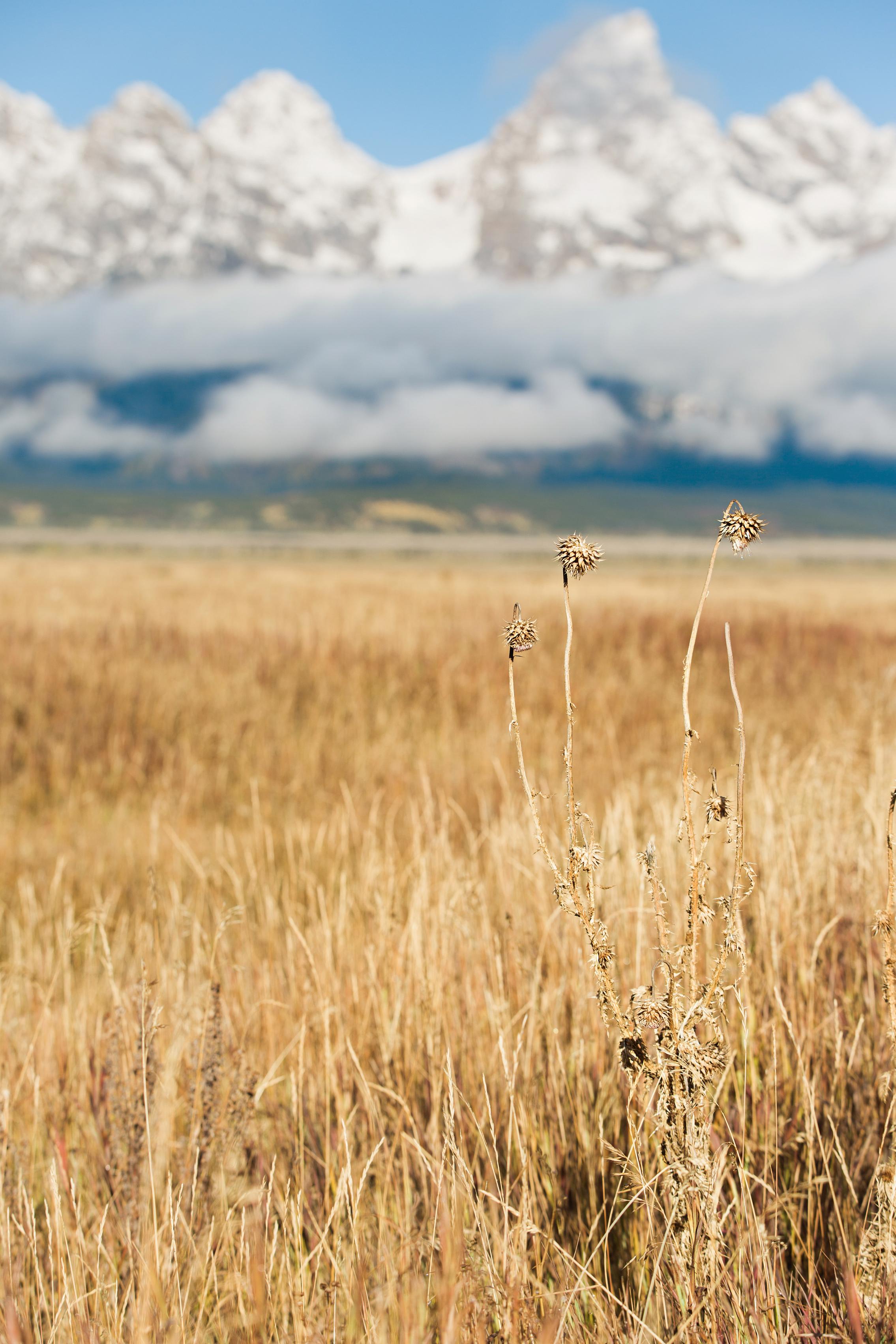 CindyGiovagnoli_Grand_Teton_National_Park_mountains_Bison_Autumn_Wyoming_Mormon_Row_aspens_fall_outdoor_photographer-045.jpg