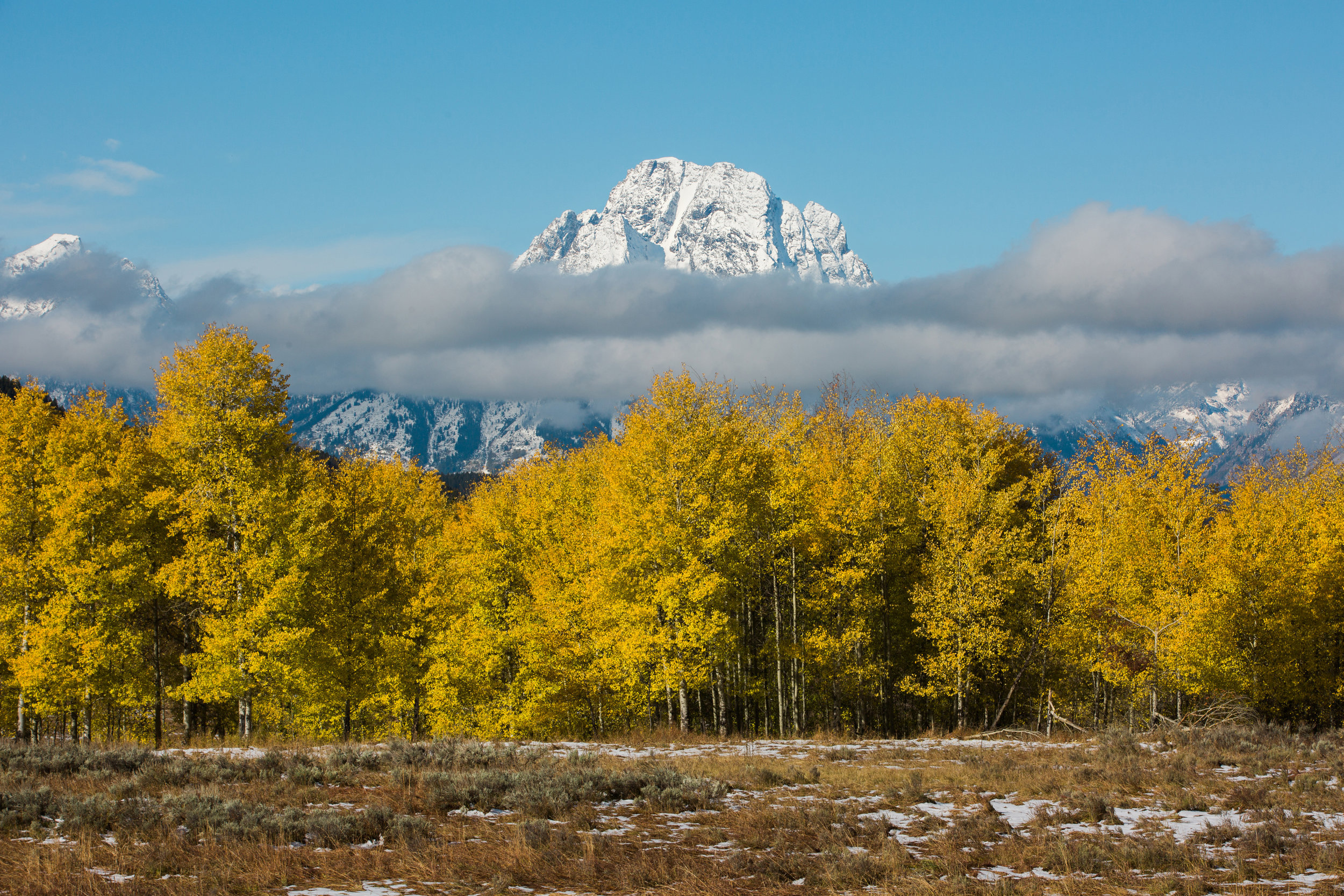 CindyGiovagnoli_Grand_Teton_National_Park_mountains_Bison_Autumn_Wyoming_Mormon_Row_aspens_fall_outdoor_photographer-047.jpg