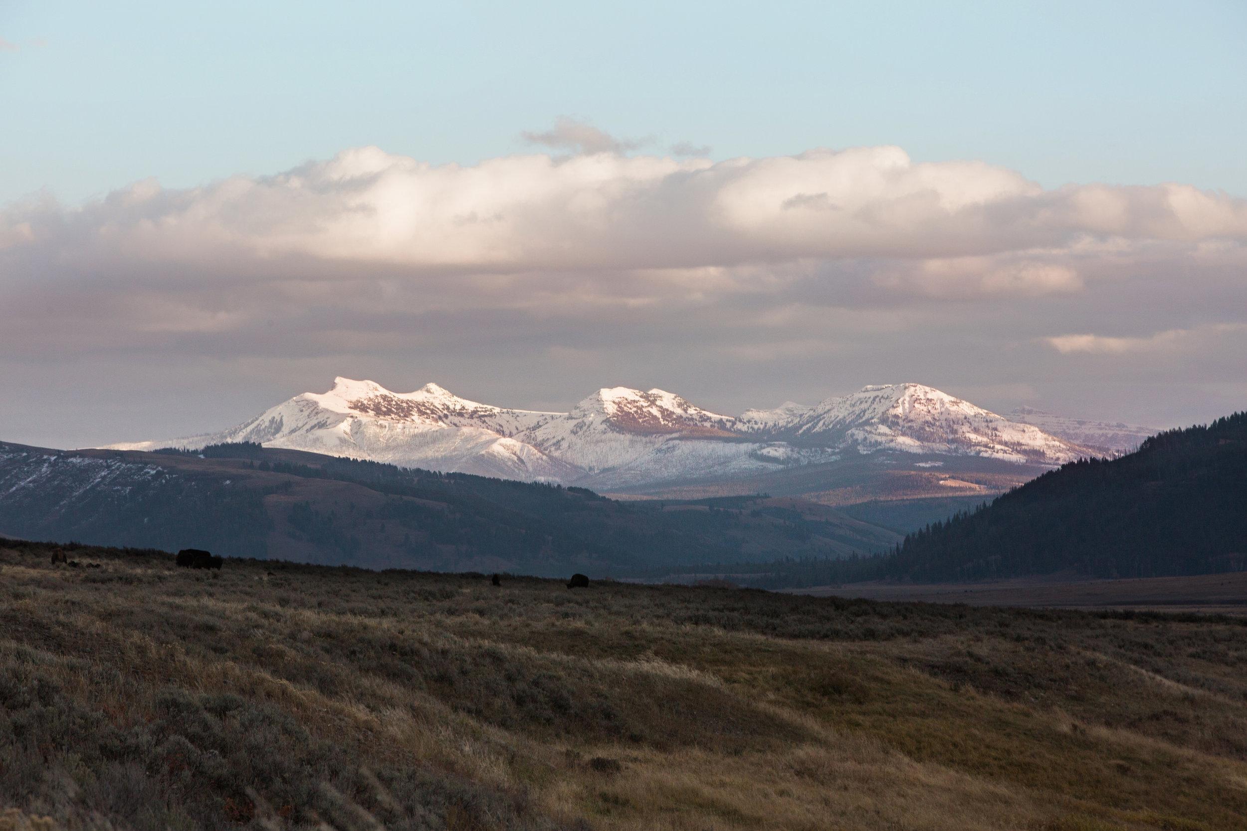 CindyGiovagnoli_Yellowstone_National_Park_Montana_Wyoming_bison_pronghorn_snow_elk_truckcamping-015.jpg