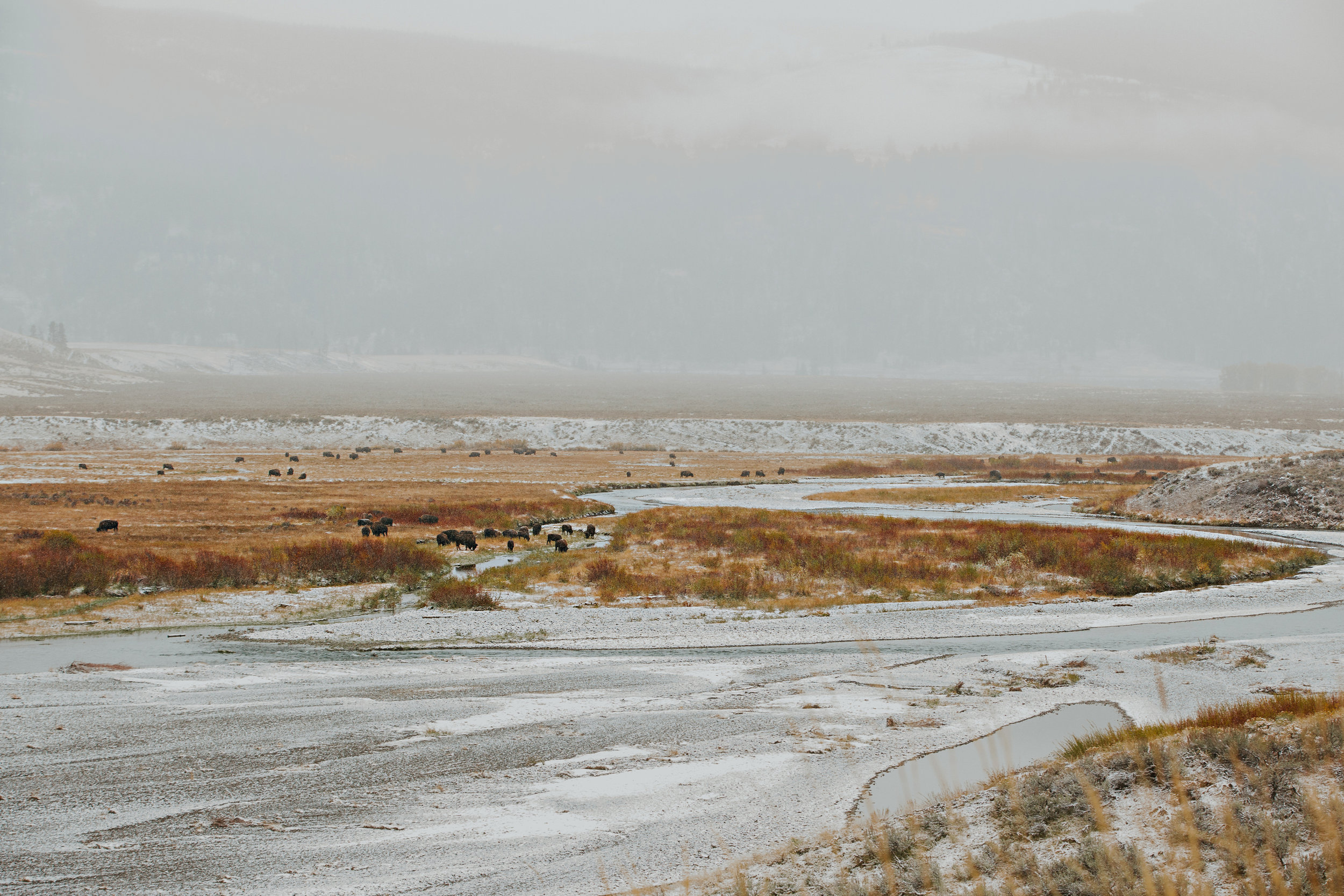 CindyGiovagnoli_Yellowstone_National_Park_Montana_Wyoming_bison_pronghorn_snow_elk_truckcamping-018.jpg