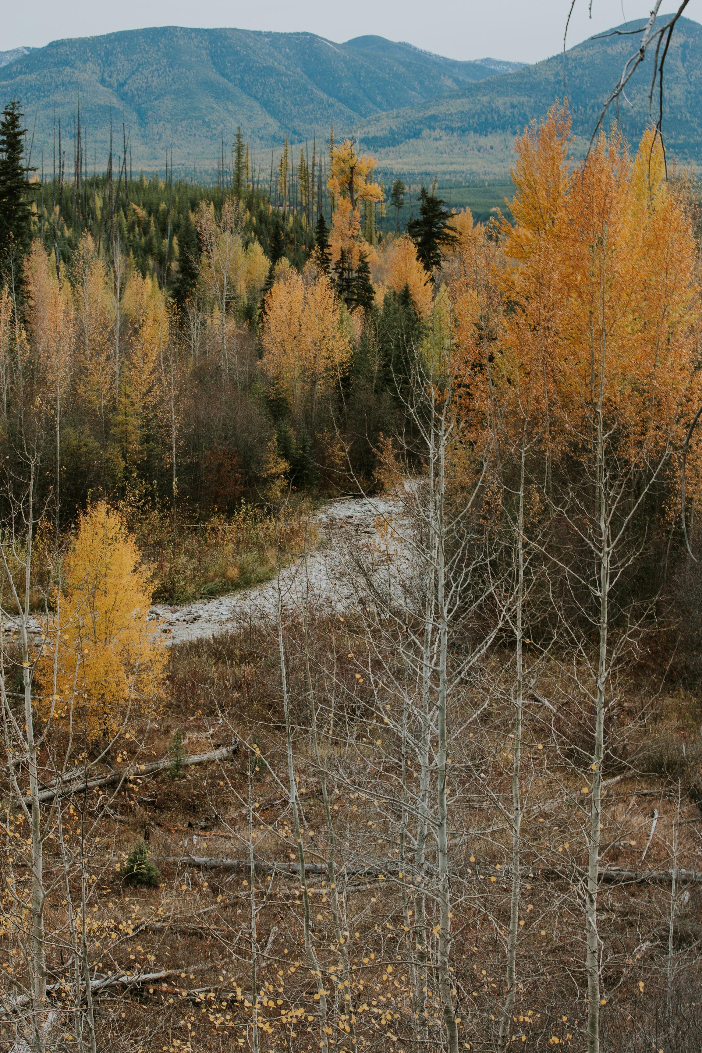 CindyGiovagnoli_Glacier_National_Park_Montana_mountains_lake_fall_autumn_road_trip-033.jpg