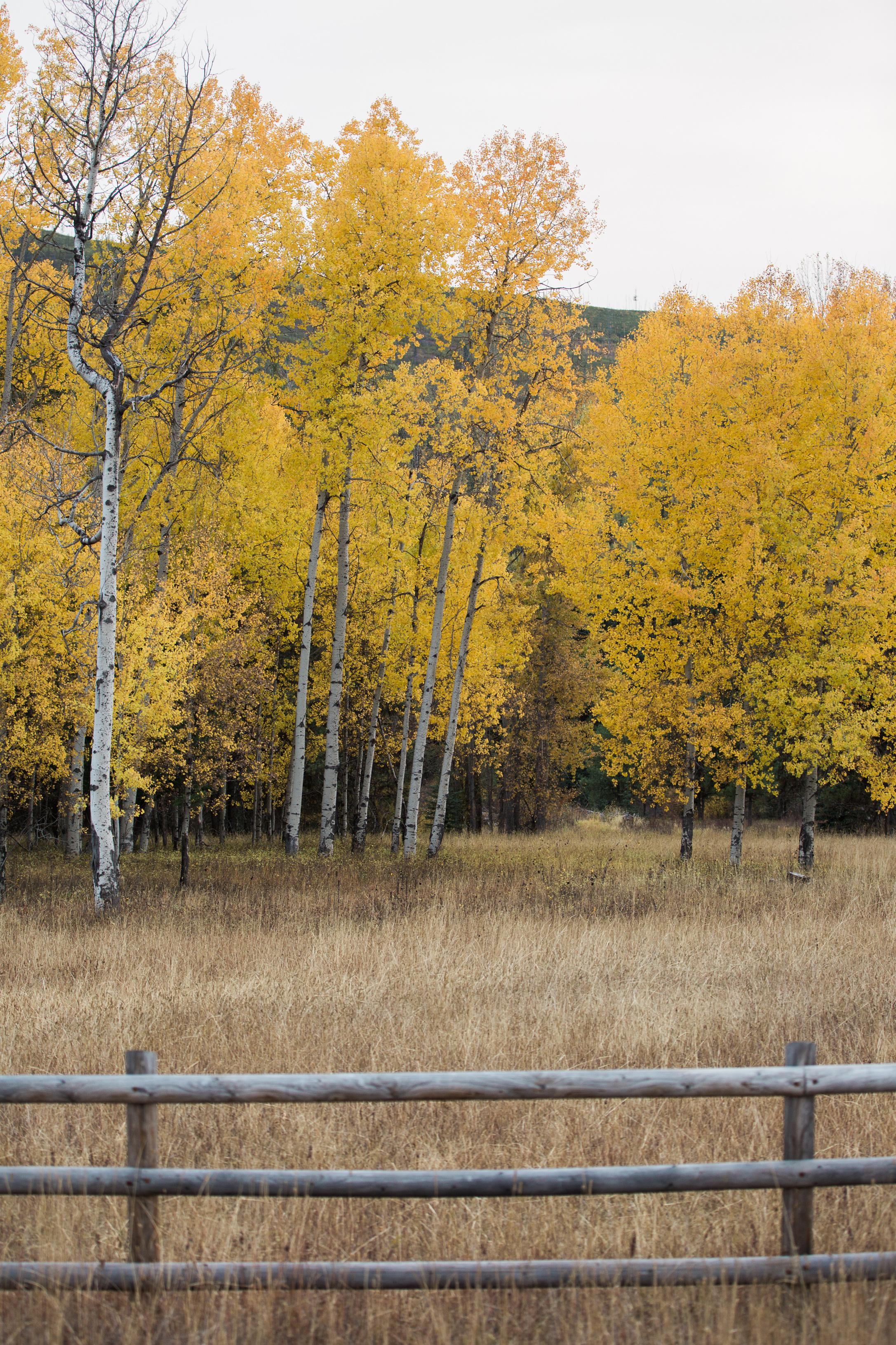 CindyGiovagnoli_Glacier_National_Park_Montana_mountains_lake_fall_autumn_road_trip-039.jpg