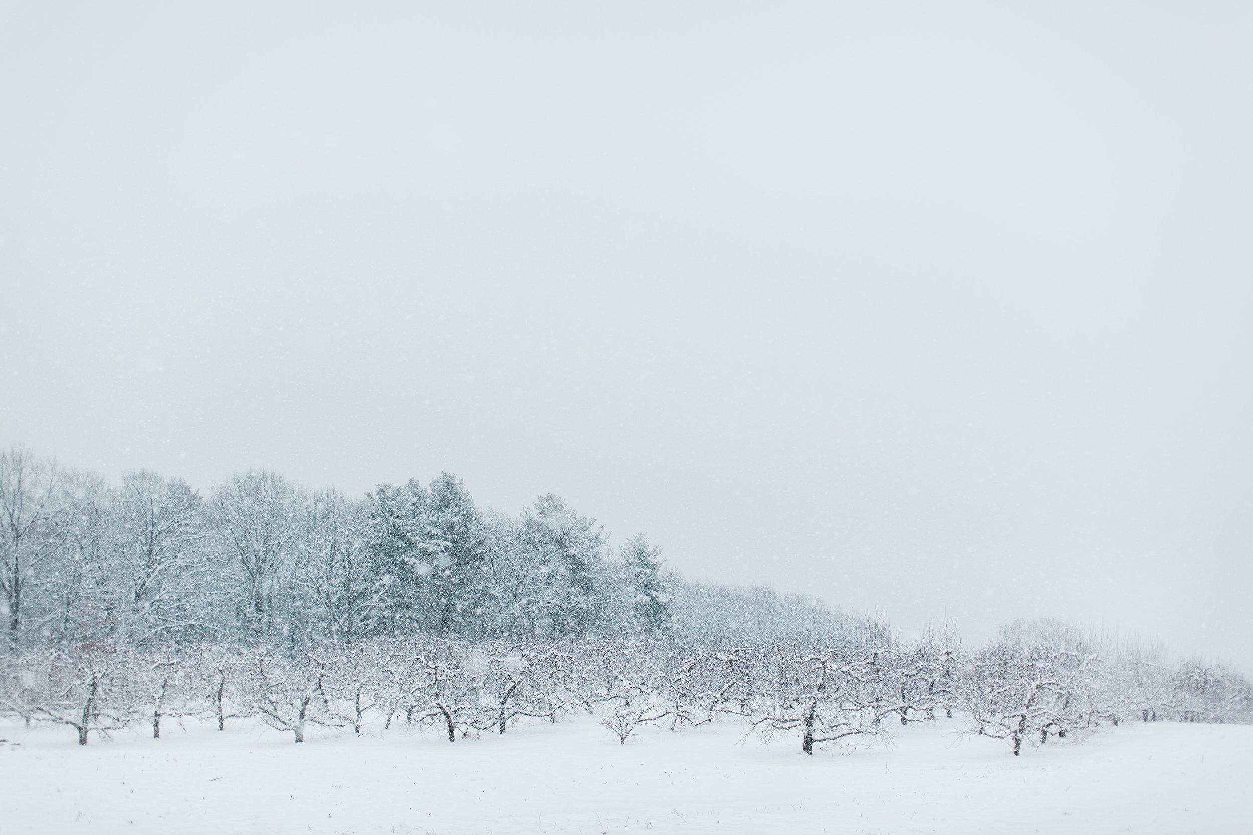 CindyGiovagnoli_New_Hampshire_New_England_snow_winter-028.jpg