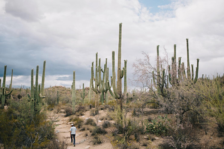 CindyGiovagnoli_Saguaro_National_Park_Tucson_Arizona_flowers_rain_spring_desert-013.jpg