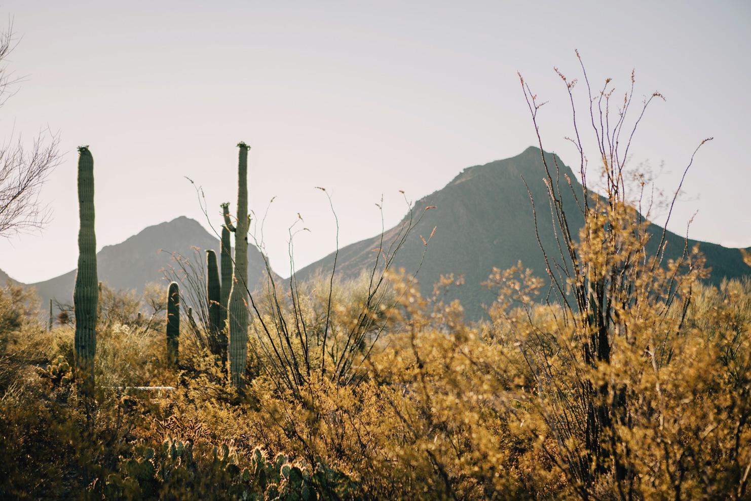 CindyGiovagnoli_Saguaro_National_Park_Tucson_Arizona_flowers_rain_spring_desert-014.jpg