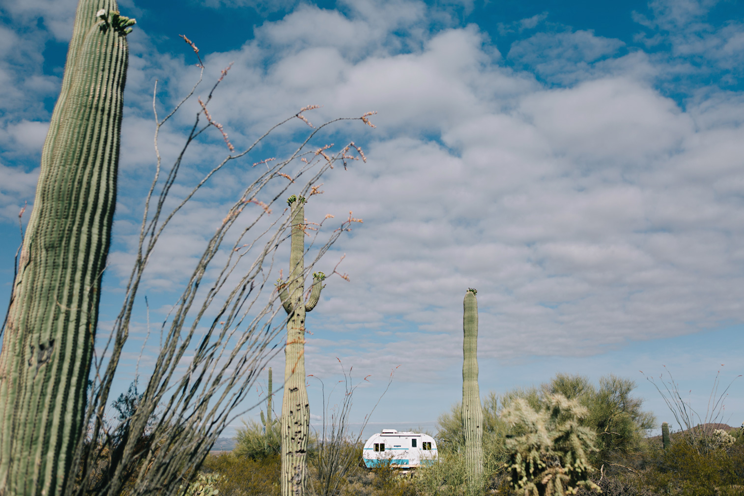 CindyGiovagnoli_Saguaro_National_Park_Tucson_Arizona_flowers_rain_spring_desert-015.jpg