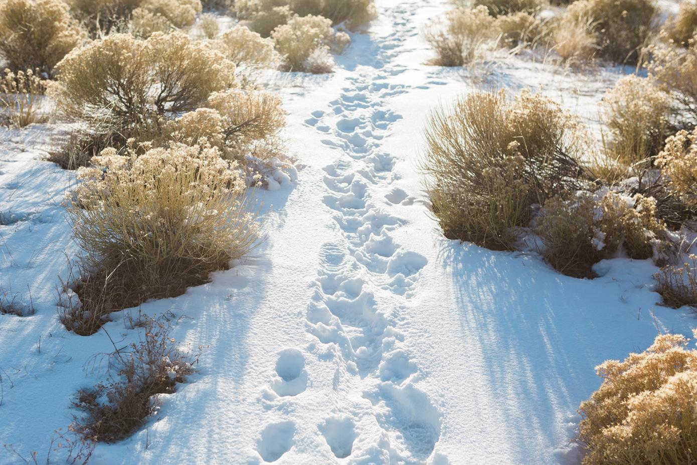 CindyGiovagnoli_Great_Sand_Dunes_Zion_National_Park_Horseshoe_Bend_Truck_Camping_Toyota_The_Narrows_roadtrip_Utah_Colorado-004.jpg