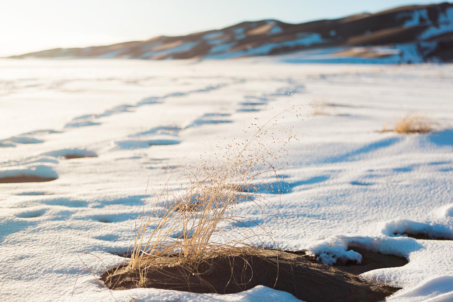 CindyGiovagnoli_Great_Sand_Dunes_National_Park_NPS_Colorado_roadtrip-011.jpg