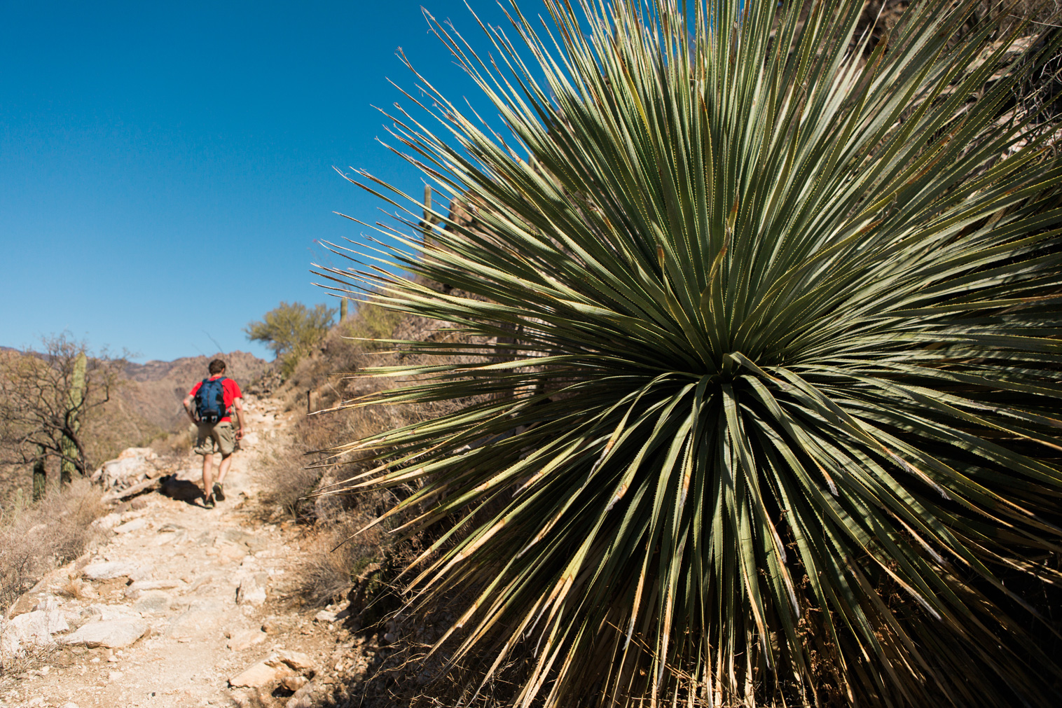 CindyGiovagnoli_Tucson_Arizona_Sabino_Canyon_Phone_Line_Trail_Uinta_Brewing_saguaro_cactus_desert_hiking-001.jpg
