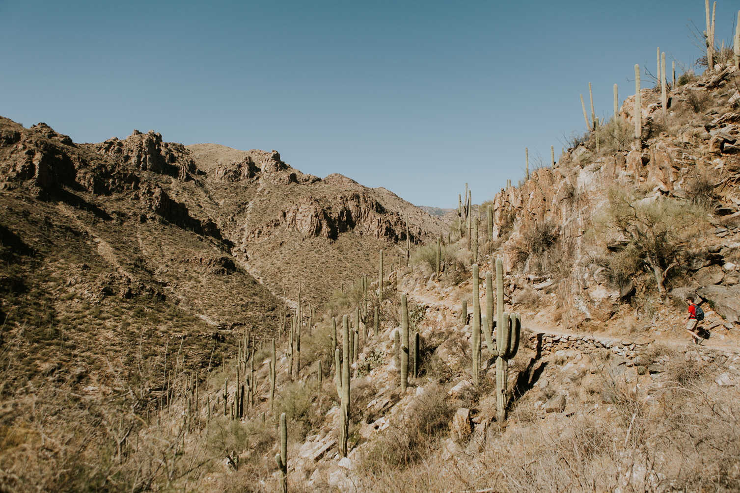 CindyGiovagnoli_Tucson_Arizona_Sabino_Canyon_Phone_Line_Trail_Uinta_Brewing_saguaro_cactus_desert_hiking-002.jpg