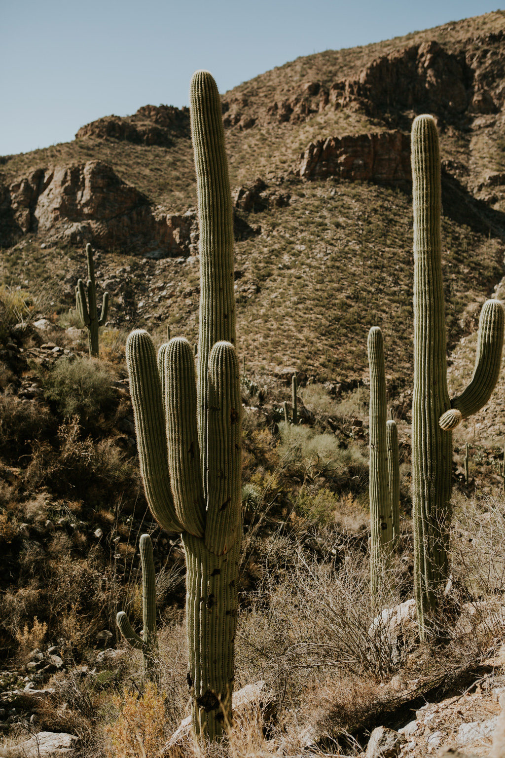 CindyGiovagnoli_Tucson_Arizona_Sabino_Canyon_Phone_Line_Trail_Uinta_Brewing_saguaro_cactus_desert_hiking-004.jpg
