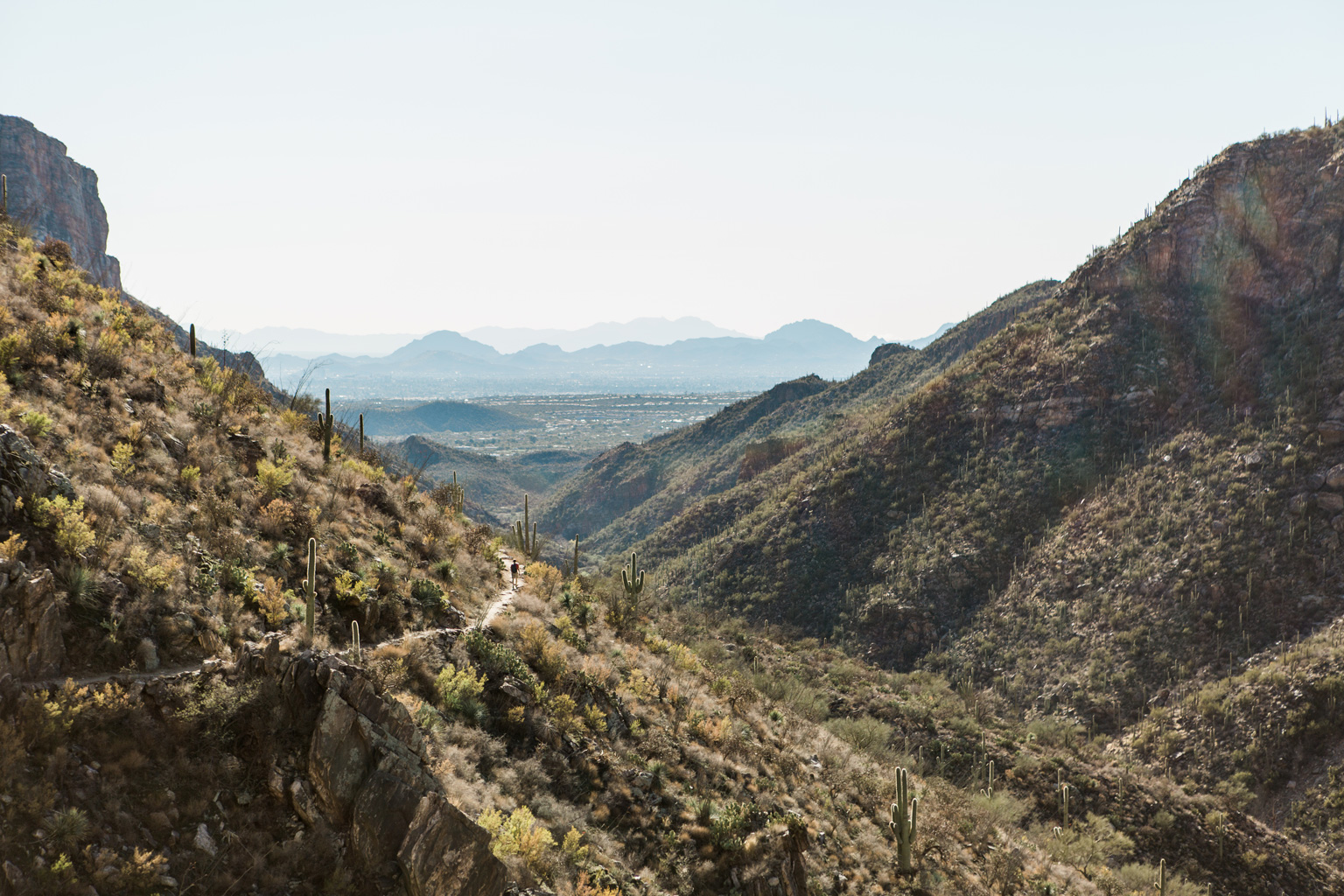 CindyGiovagnoli_Tucson_Arizona_Sabino_Canyon_Phone_Line_Trail_Uinta_Brewing_saguaro_cactus_desert_hiking-009.jpg