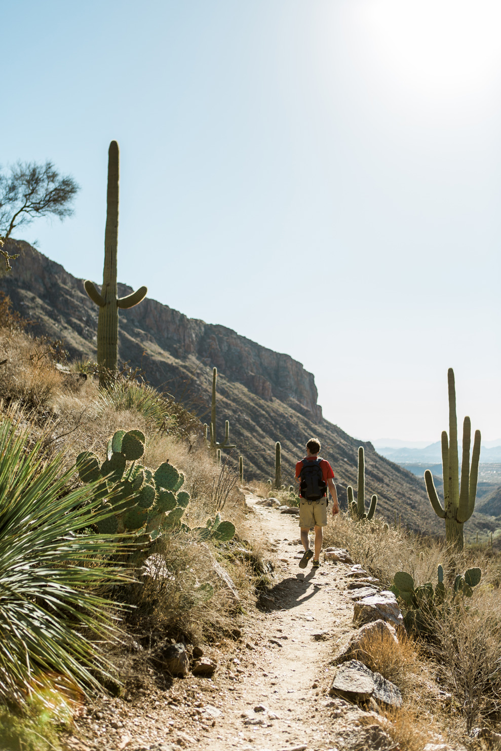CindyGiovagnoli_Tucson_Arizona_Sabino_Canyon_Phone_Line_Trail_Uinta_Brewing_saguaro_cactus_desert_hiking-010.jpg