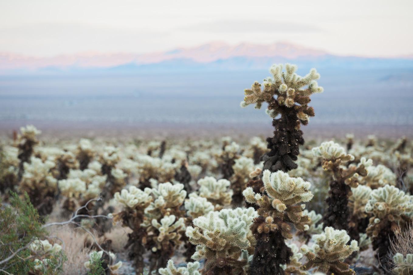 CindyGiovagnoli_Joshua_Tree_National_Park_California_Mojave_Desert_Cholla_Garden_Hidden_Valley_climbing_hiking_camping-013.jpg
