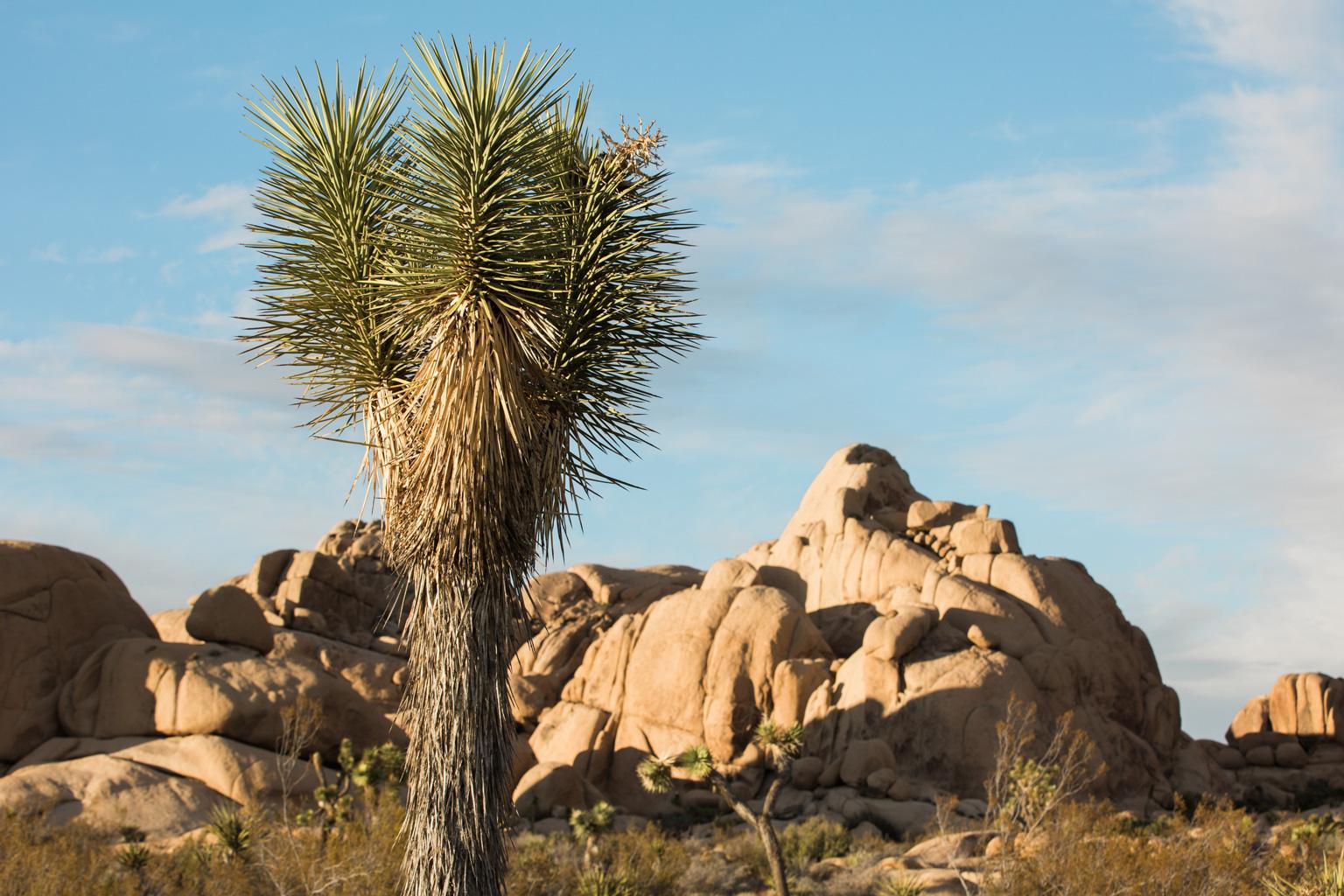 CindyGiovagnoli_Joshua_Tree_National_Park_California_Mojave_Desert_Cholla_Garden_Hidden_Valley_climbing_hiking_camping-016.jpg