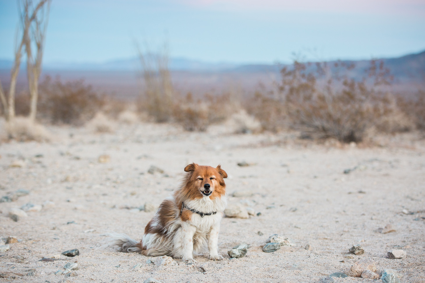 CindyGiovagnoli_Joshua_Tree_National_Park_California_Mojave_Desert_Cholla_Garden_Hidden_Valley_climbing_hiking_camping-017.jpg