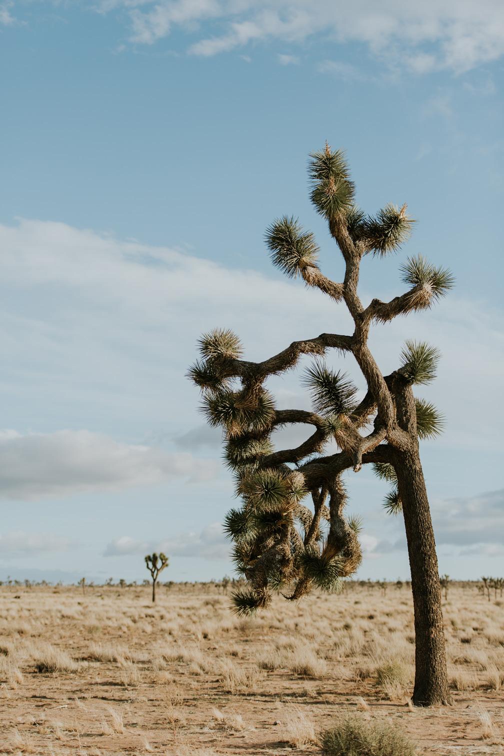 CindyGiovagnoli_Joshua_Tree_National_Park_California_Mojave_Desert_Cholla_Garden_Hidden_Valley_climbing_hiking_camping-019.jpg