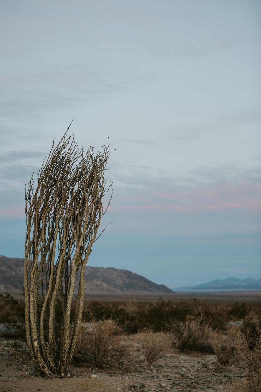CindyGiovagnoli_Joshua_Tree_National_Park_California_Mojave_Desert_Cholla_Garden_Hidden_Valley_climbing_hiking_camping-024.jpg