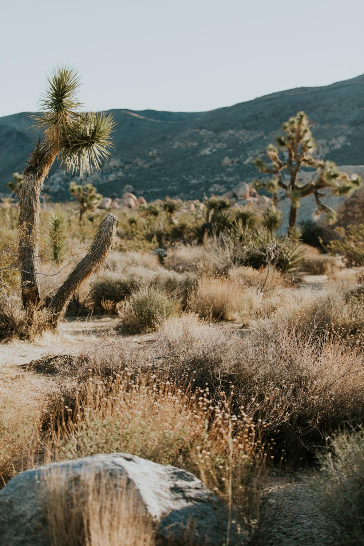 CindyGiovagnoli_Joshua_Tree_National_Park_California_Mojave_Desert_Cholla_Garden_Hidden_Valley_climbing_hiking_camping-029.jpg