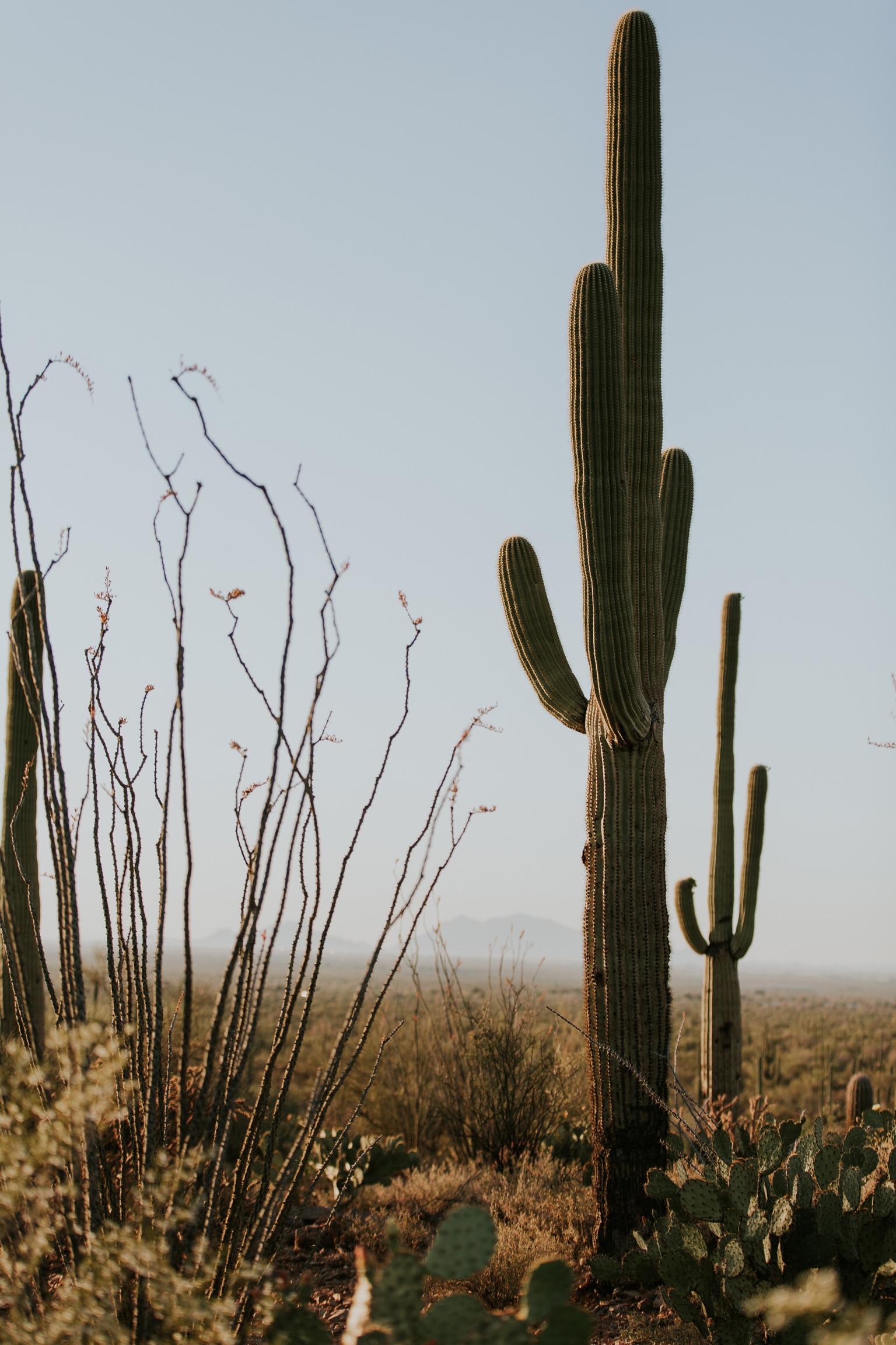 CindyGiovagnoli_Tucson_Arizona_Saguaro_National_Park_cactus_sunset_blooming_spring_sunset_petroglyphs_Native_American_indigenous-002.jpg
