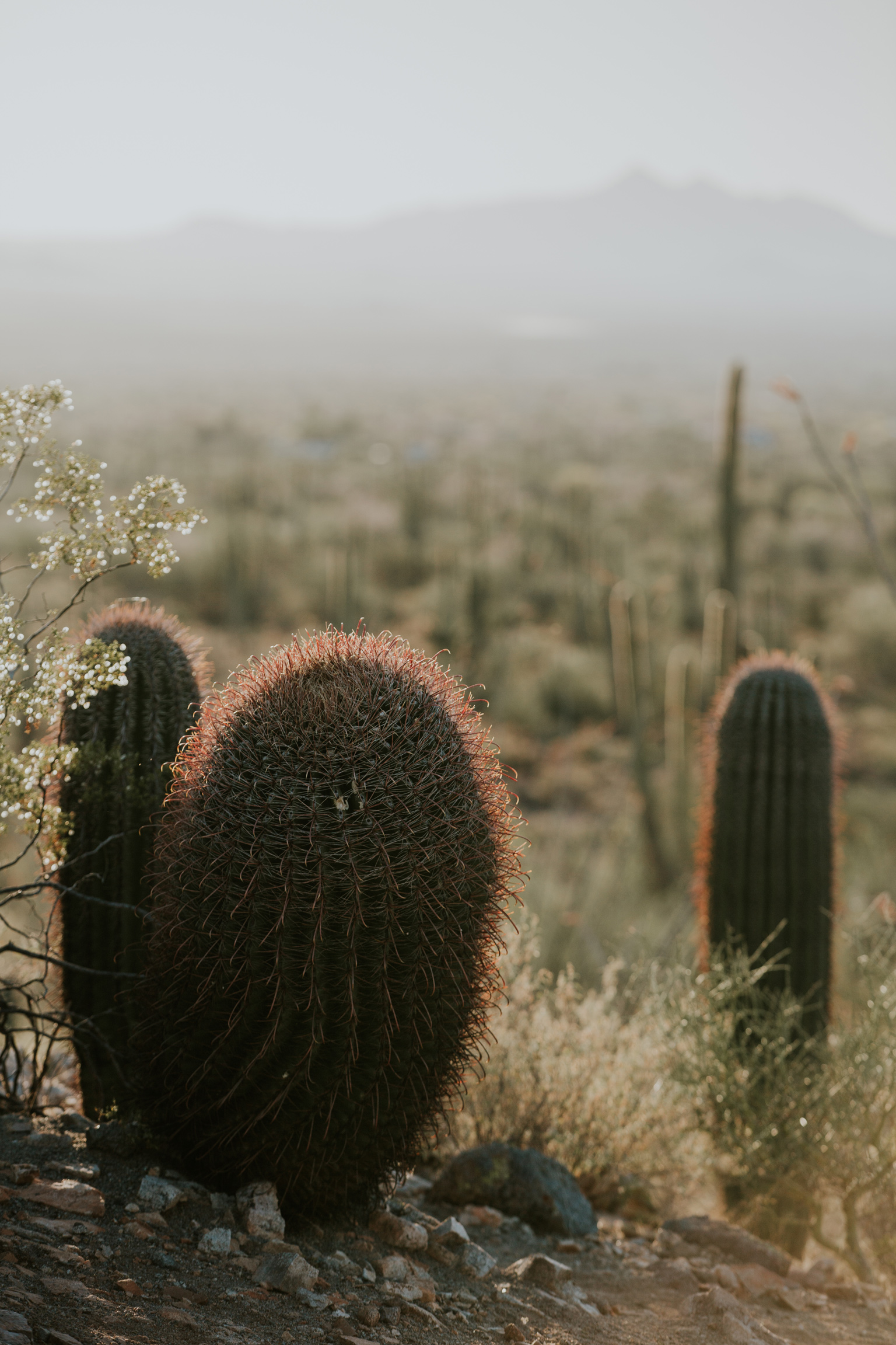 CindyGiovagnoli_Tucson_Arizona_Saguaro_National_Park_cactus_sunset_blooming_spring_sunset_petroglyphs_Native_American_indigenous-005.jpg