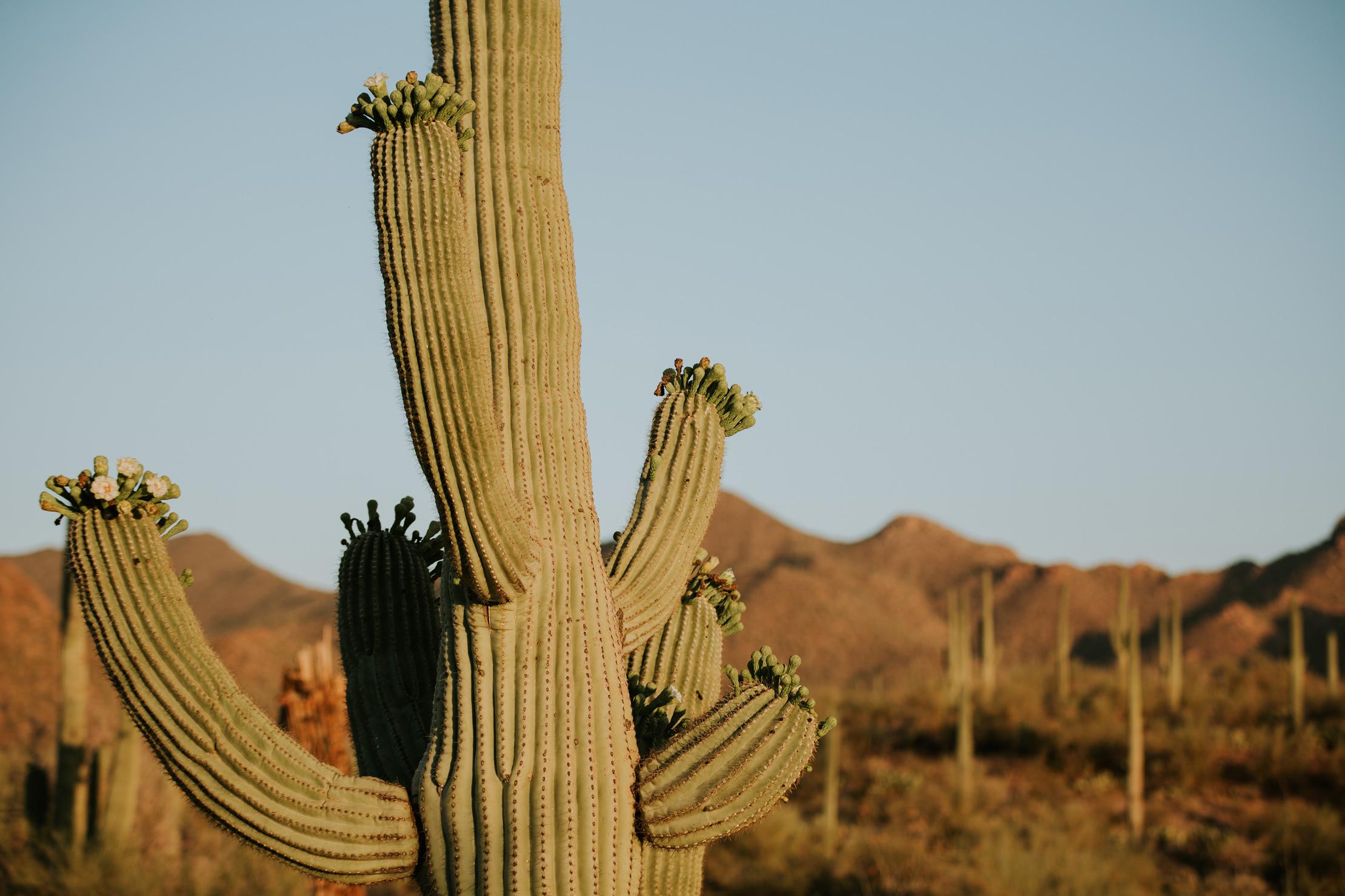 CindyGiovagnoli_Tucson_Arizona_Saguaro_National_Park_cactus_sunset_blooming_spring_sunset_petroglyphs_Native_American_indigenous-006.jpg