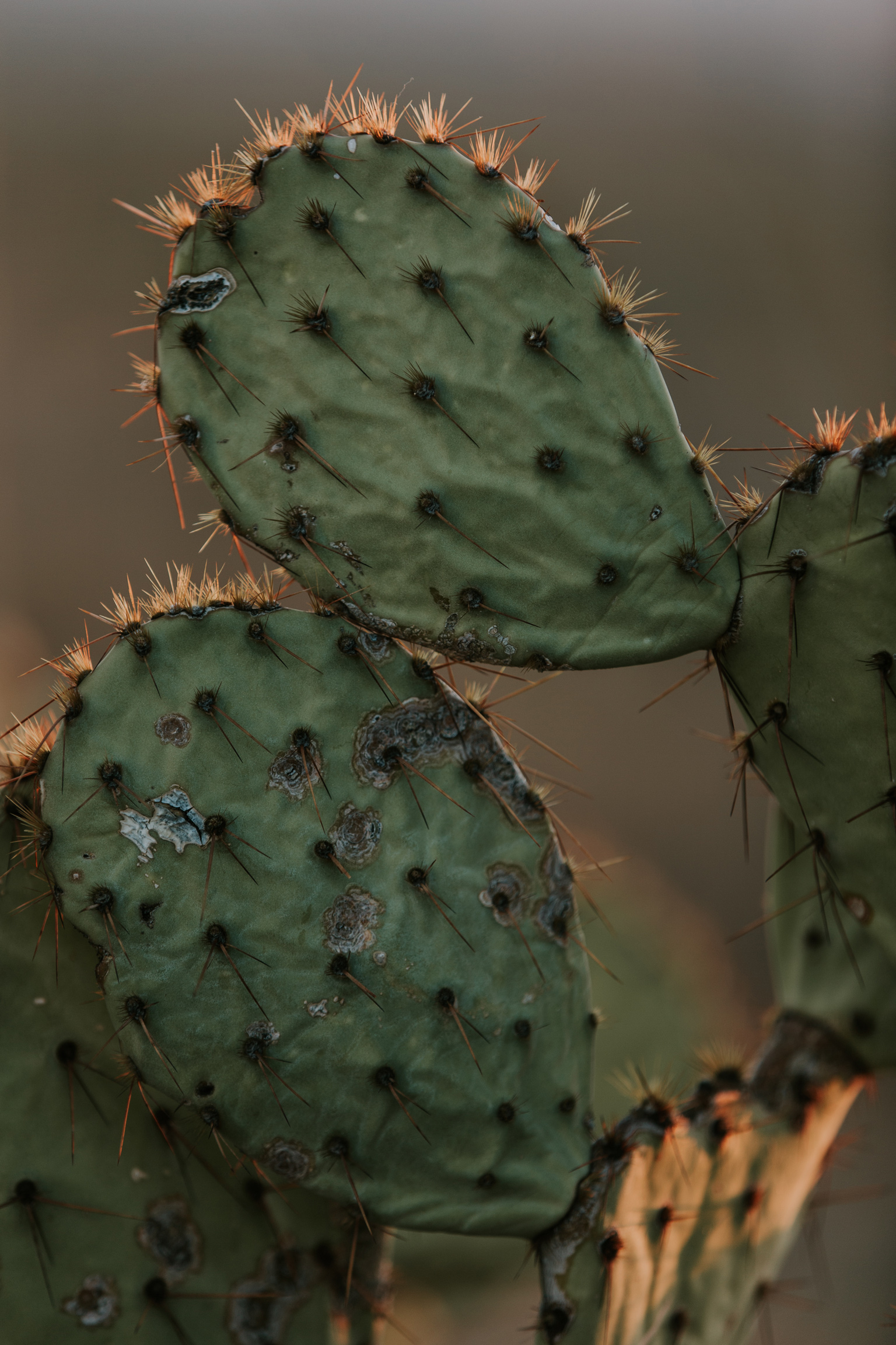 CindyGiovagnoli_Tucson_Arizona_Saguaro_National_Park_cactus_sunset_blooming_spring_sunset_petroglyphs_Native_American_indigenous-010.jpg