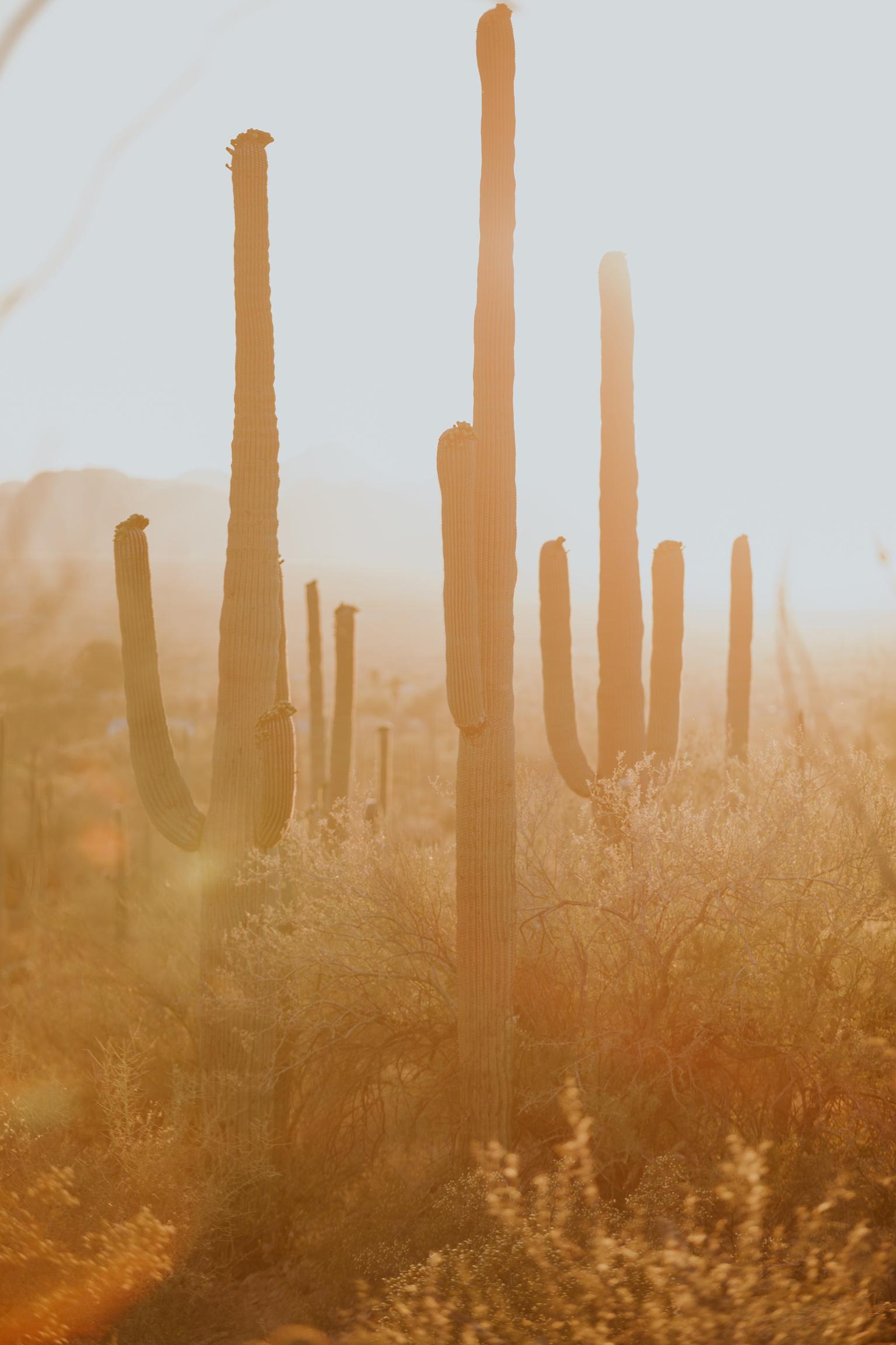 CindyGiovagnoli_Tucson_Arizona_Saguaro_National_Park_cactus_sunset_blooming_spring_sunset_petroglyphs_Native_American_indigenous-013.jpg