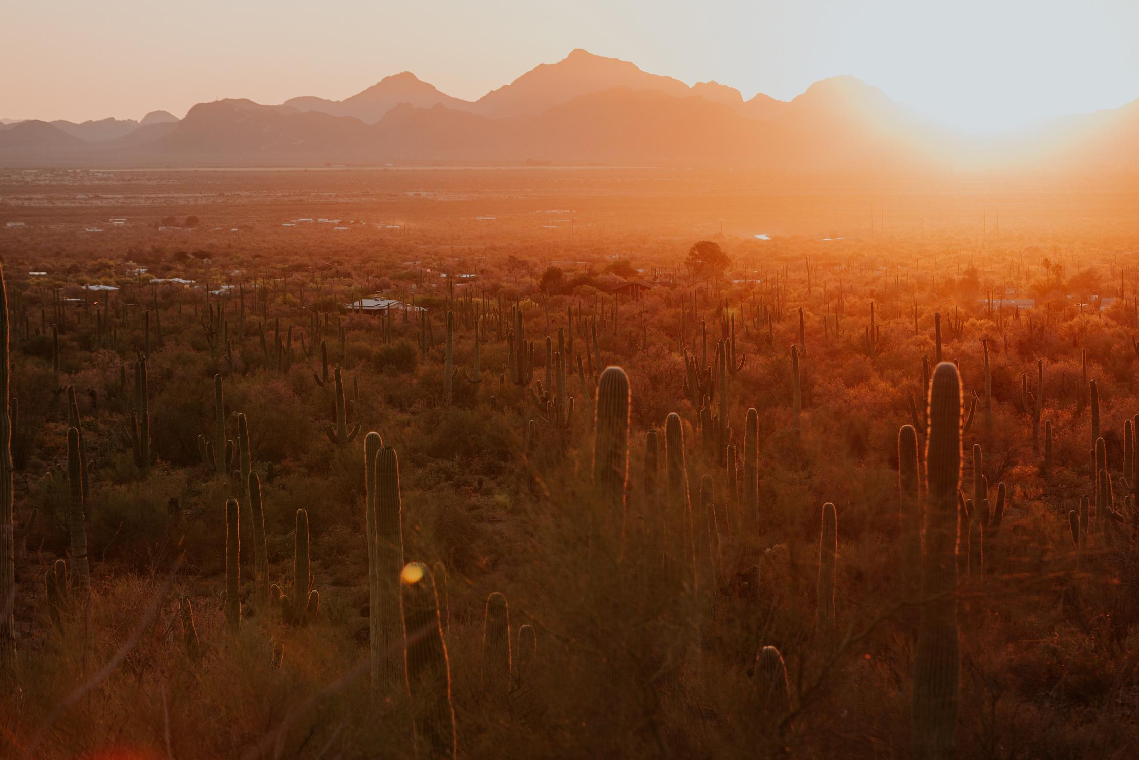 CindyGiovagnoli_Tucson_Arizona_Saguaro_National_Park_cactus_sunset_blooming_spring_sunset_petroglyphs_Native_American_indigenous-017.jpg