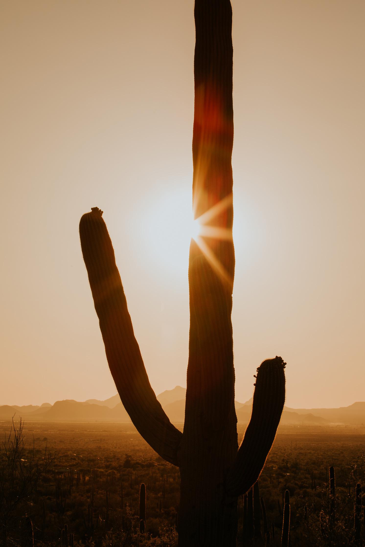 CindyGiovagnoli_Tucson_Arizona_Saguaro_National_Park_cactus_sunset_blooming_spring_sunset_petroglyphs_Native_American_indigenous-023.jpg