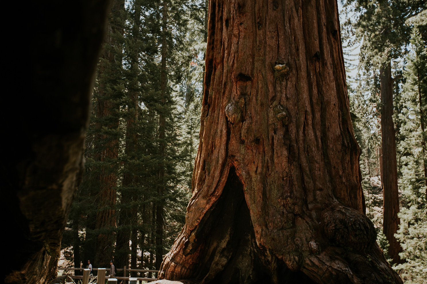 CindyGiovagnoli_California_Sequoia_Kings_Canyon_National_Park_trees_travel_road_trip-006.jpg