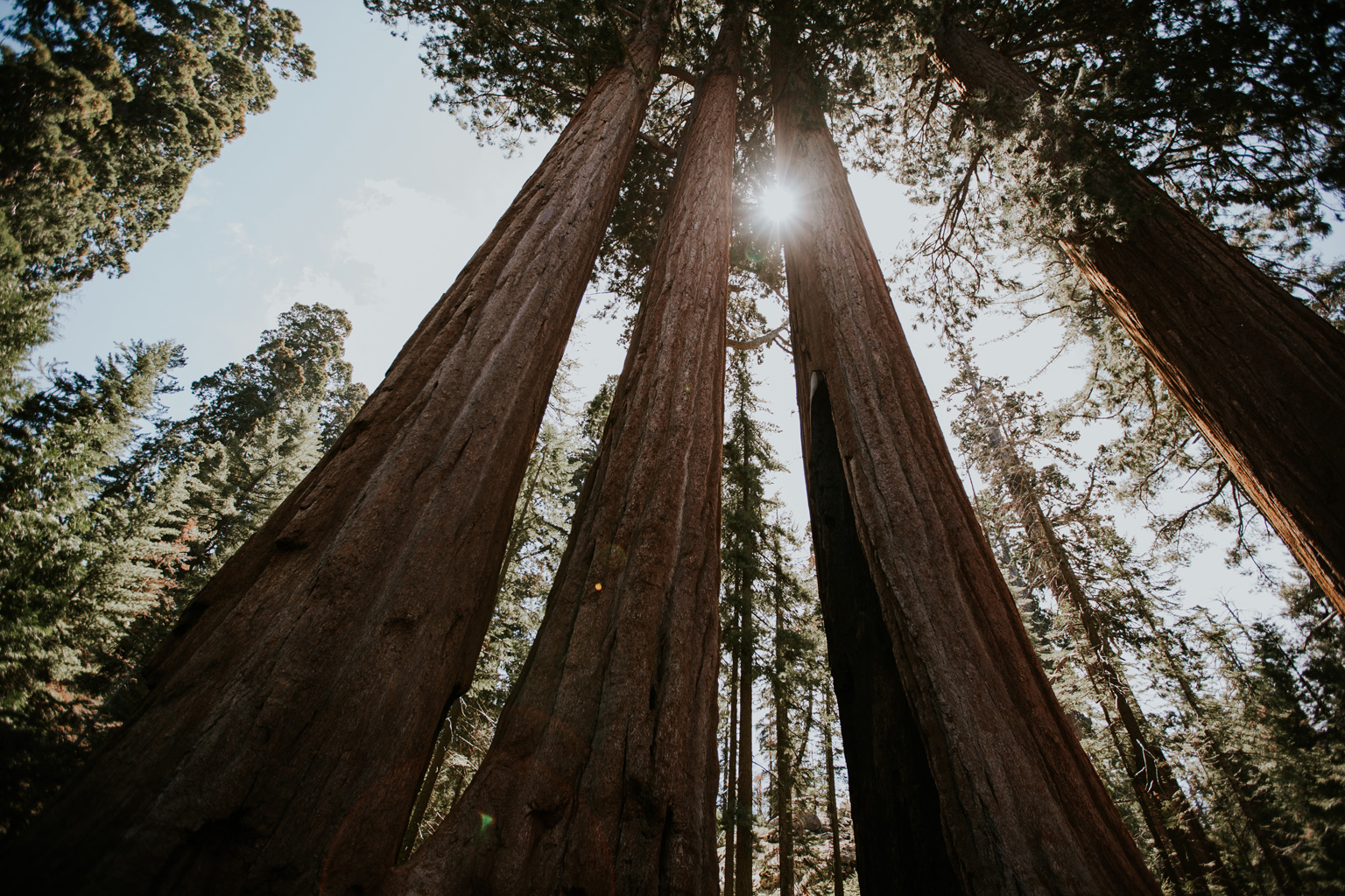 CindyGiovagnoli_California_Sequoia_Kings_Canyon_National_Park_trees_travel_road_trip-010.jpg