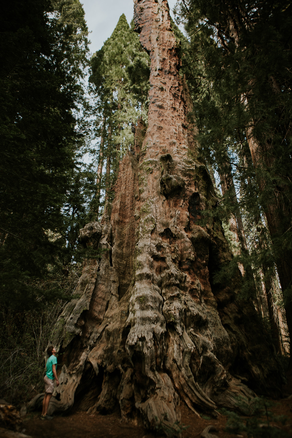 CindyGiovagnoli_California_Sequoia_Kings_Canyon_National_Park_trees_travel_road_trip-011.jpg