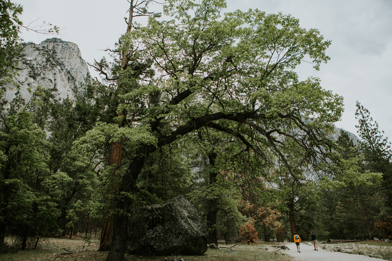 CindyGiovagnoli_Sequoia_KingsCanyon_National_Park_California_forest_fire-001.jpg