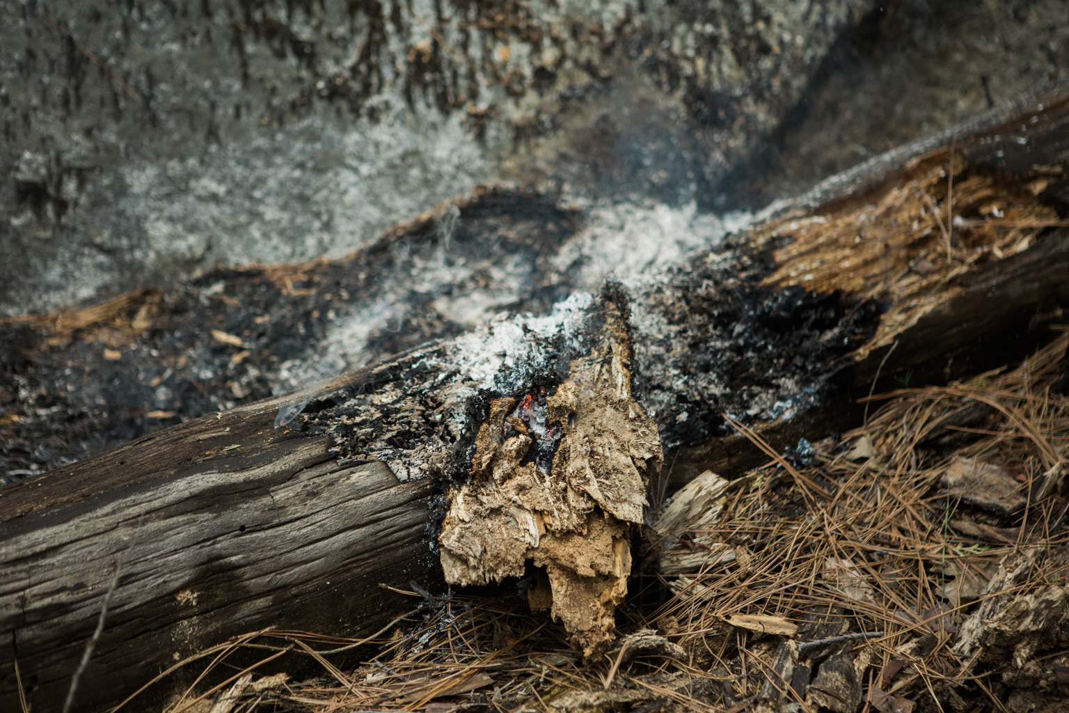 CindyGiovagnoli_Sequoia_KingsCanyon_National_Park_California_forest_fire-023.jpg