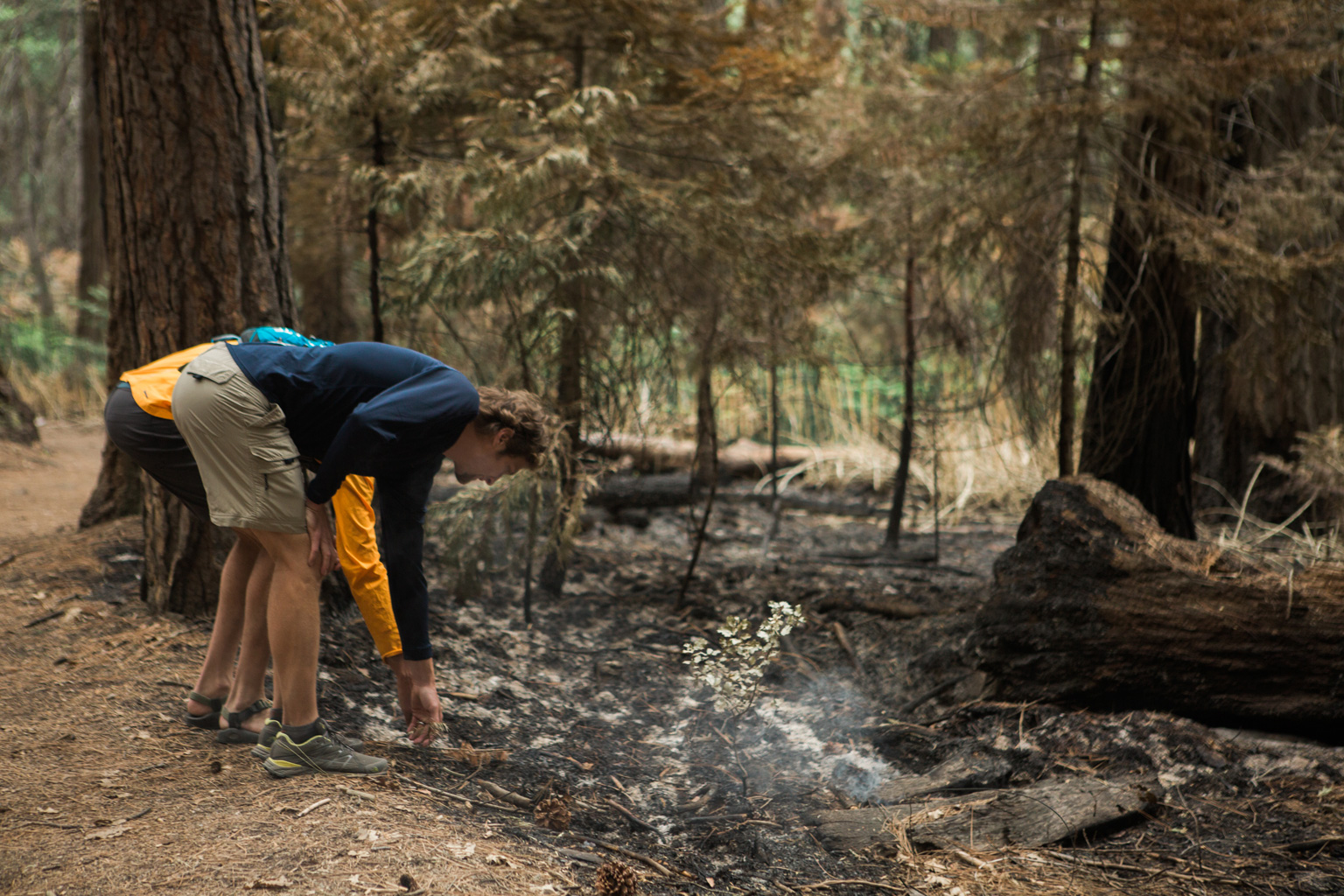CindyGiovagnoli_Sequoia_KingsCanyon_National_Park_California_forest_fire-022.jpg