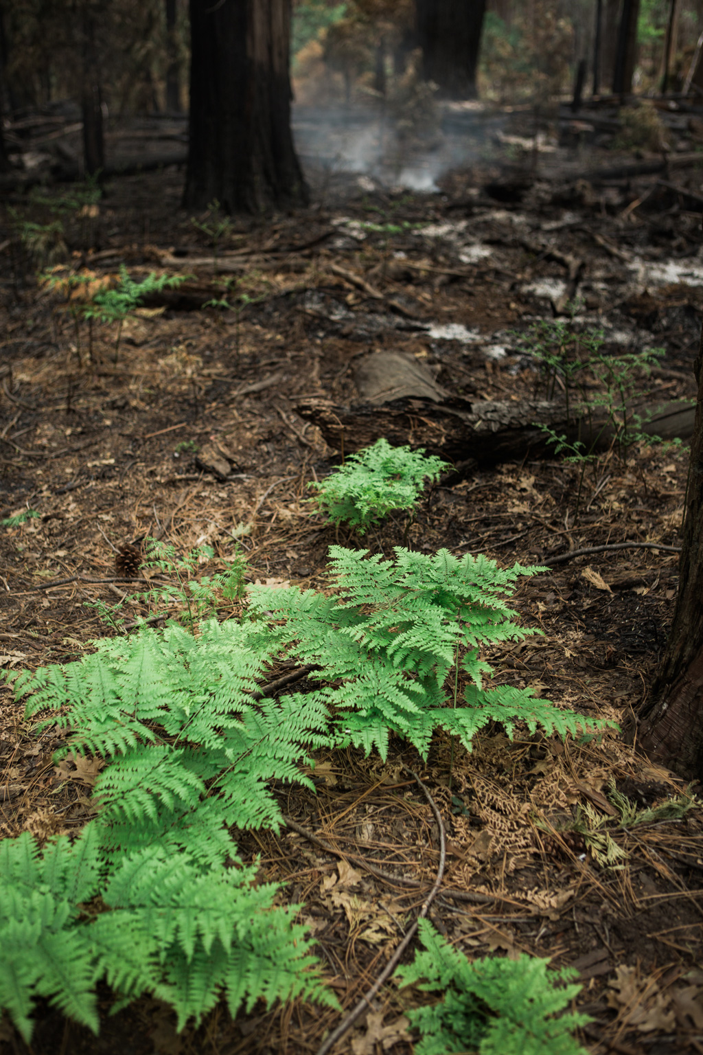 CindyGiovagnoli_Sequoia_KingsCanyon_National_Park_California_forest_fire-026.jpg