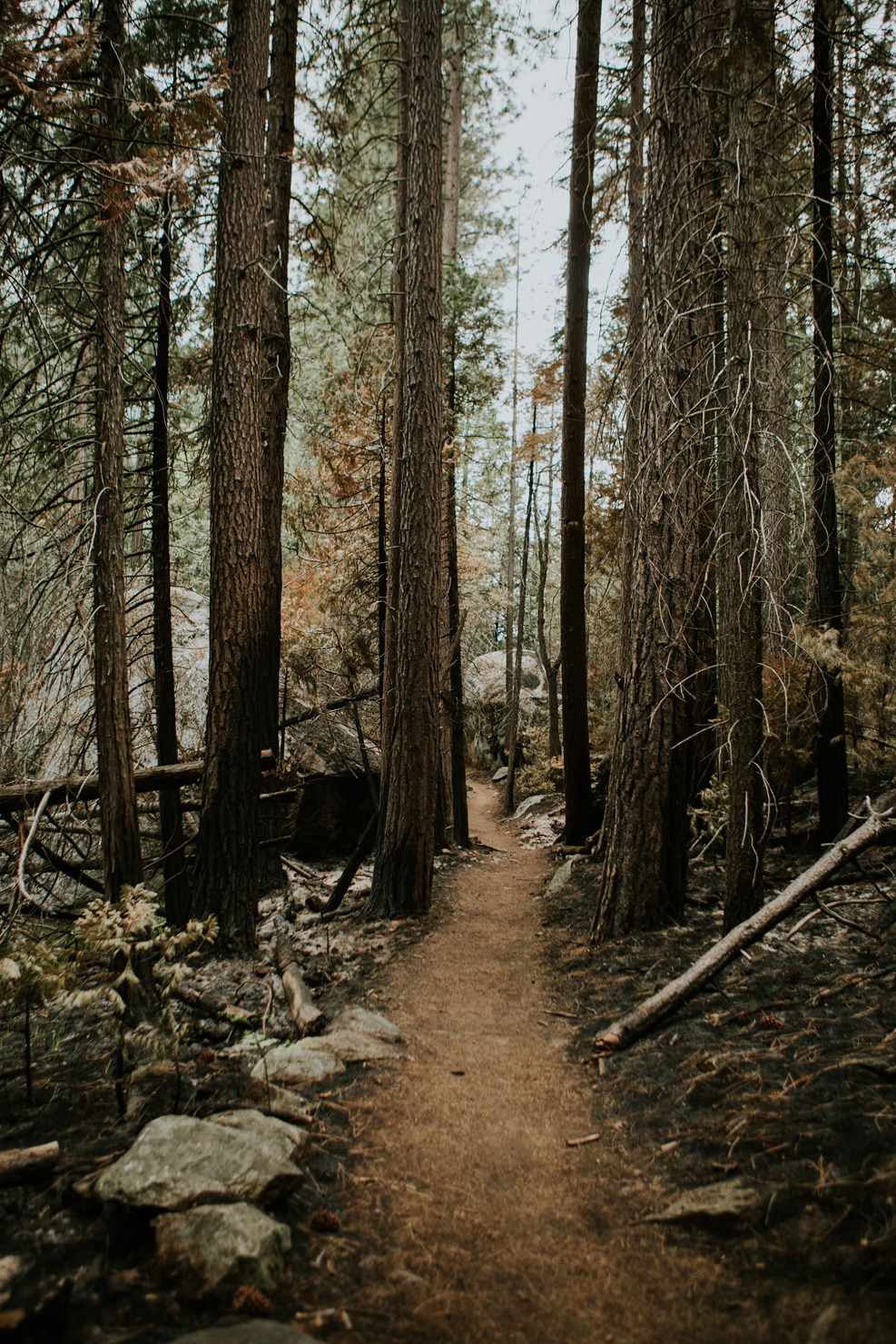CindyGiovagnoli_Sequoia_KingsCanyon_National_Park_California_forest_fire-028.jpg