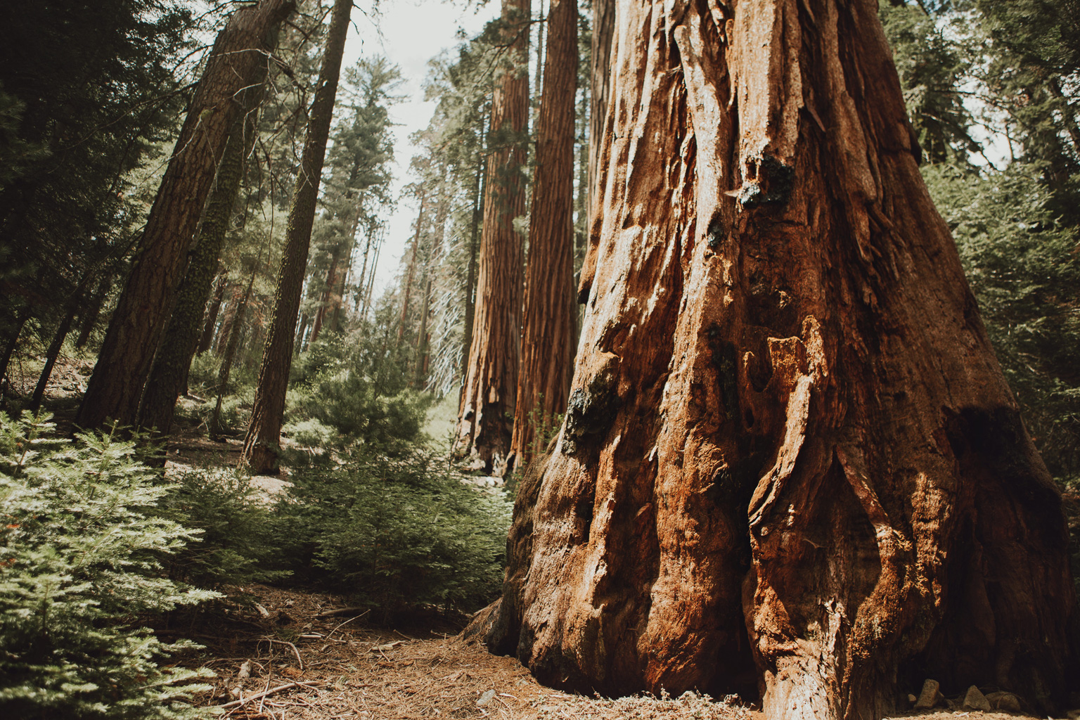 CindyGiovagnoli_Sequoia_Kings_Canyon_National_Park_spring_hiking_dogwood-009.jpg
