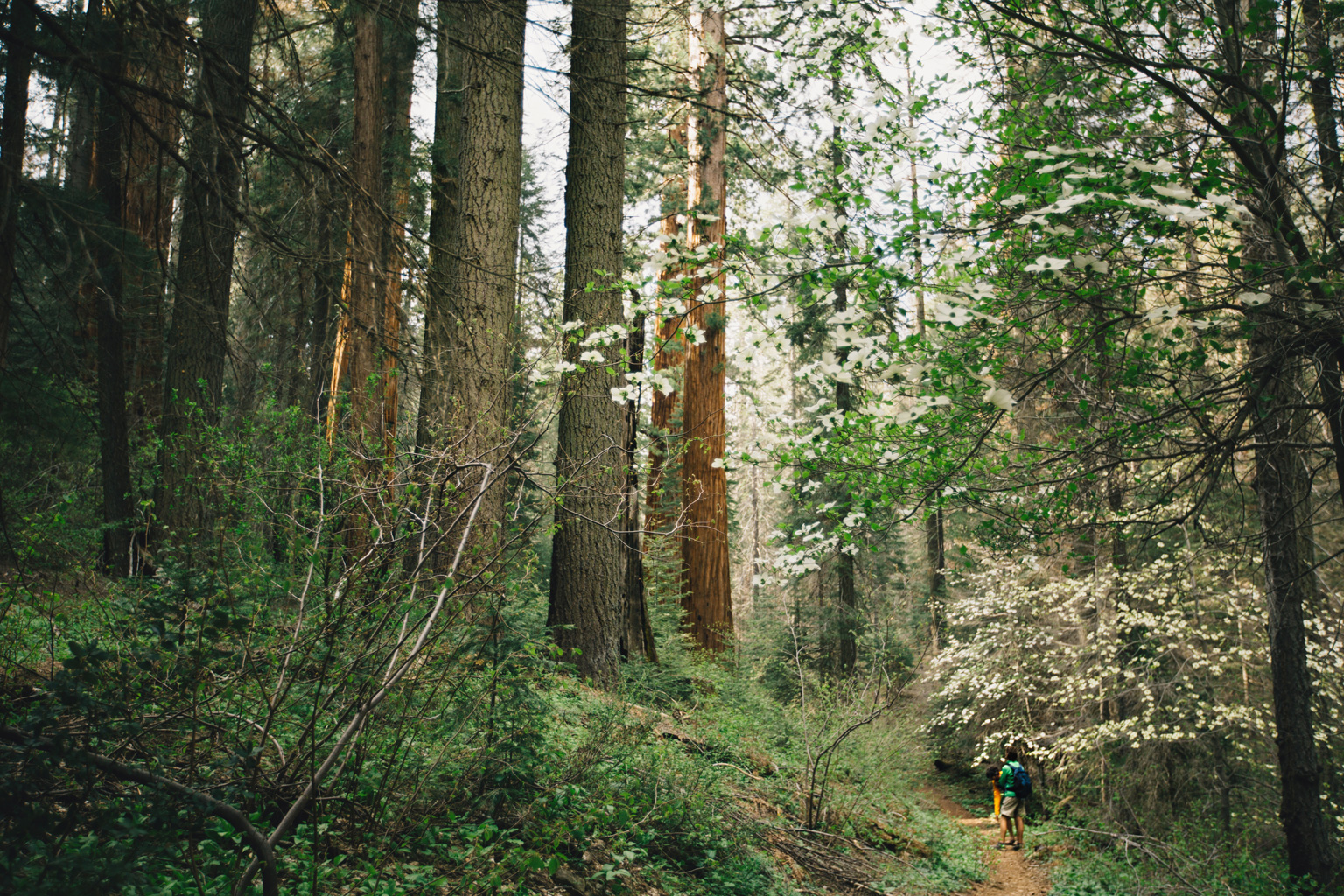 CindyGiovagnoli_Sequoia_Kings_Canyon_National_Park_spring_hiking_dogwood-017.jpg