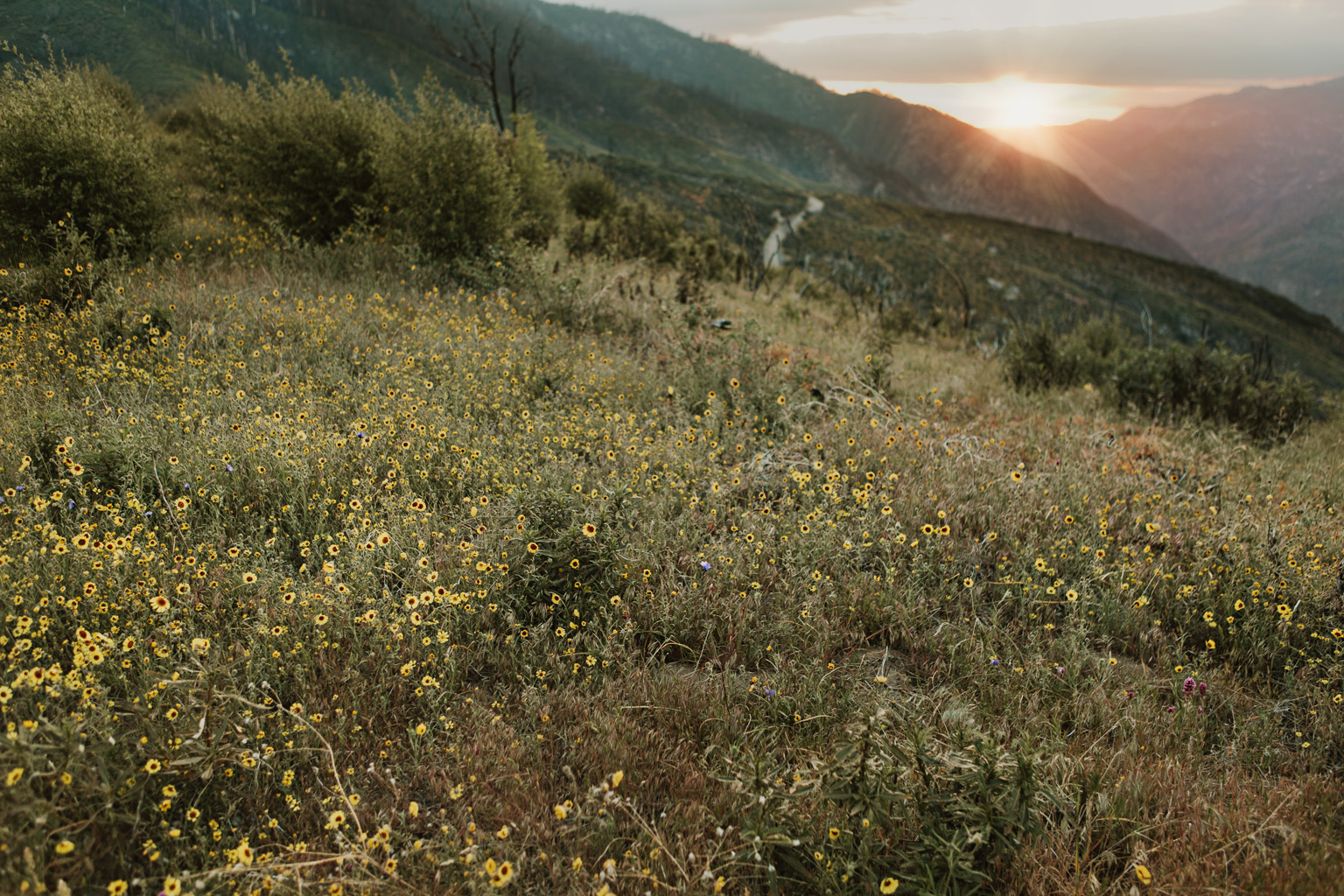 CindyGiovagnoli_Kings_Canyon_National_Park_hike_firetower_lookout_sunset-022.jpg