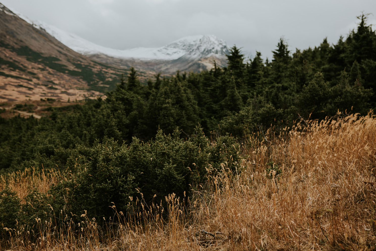 CindyGiovagnoli_Anchorage_Alaska_Flattop_mountain_hike_snocapped-006.jpg