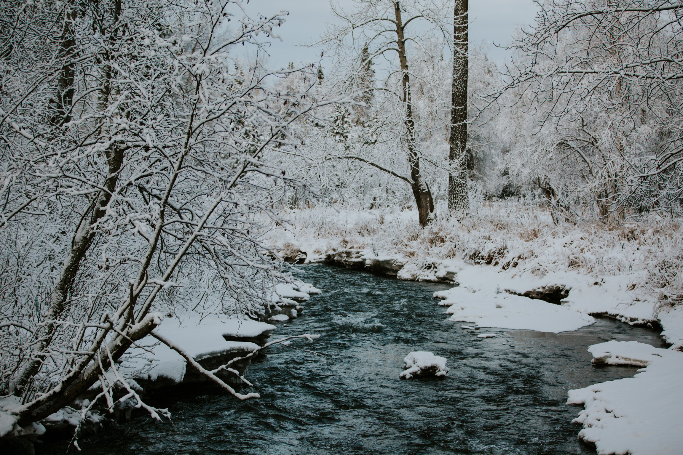 CindyGiovagnoli_Alaska_Anchorage_CampbellTract_Bicentennial_Park_winter_snow-002.jpg