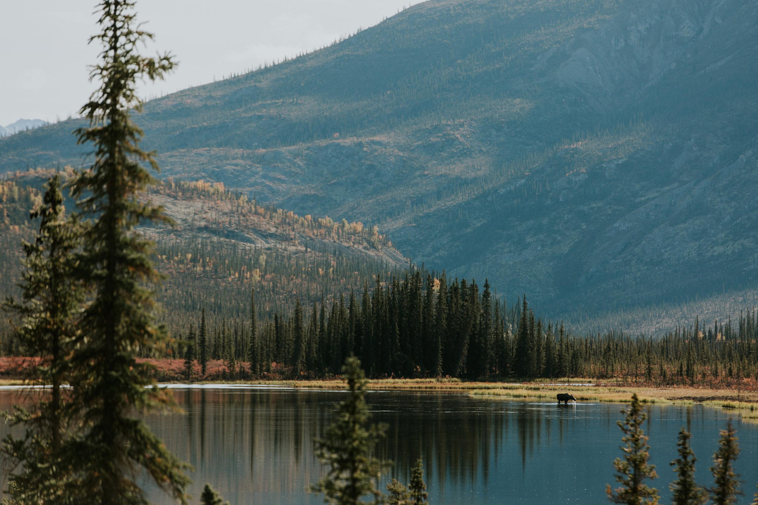 CindyGiovagnoli_Alaska_KoyukukRiver_SukakpakMountain_JimRiver_ArcticCircle_fly_fishing_September-008.jpg