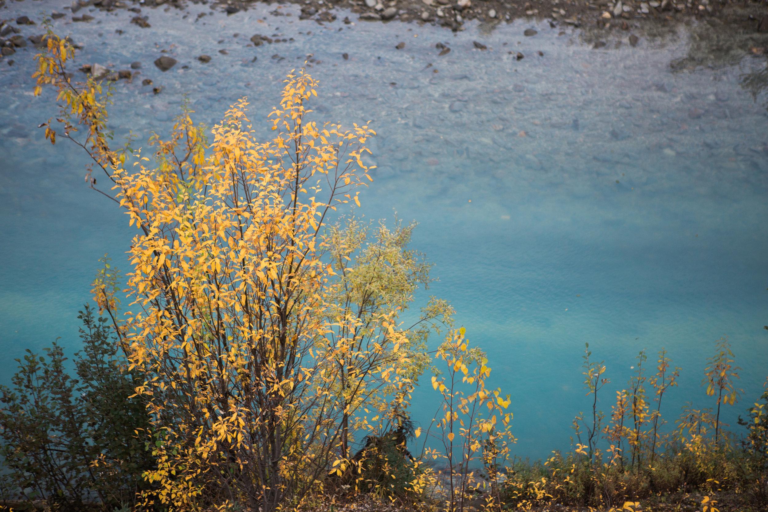 CindyGiovagnoli_Alaska_KoyukukRiver_SukakpakMountain_JimRiver_ArcticCircle_fly_fishing_September-053.jpg