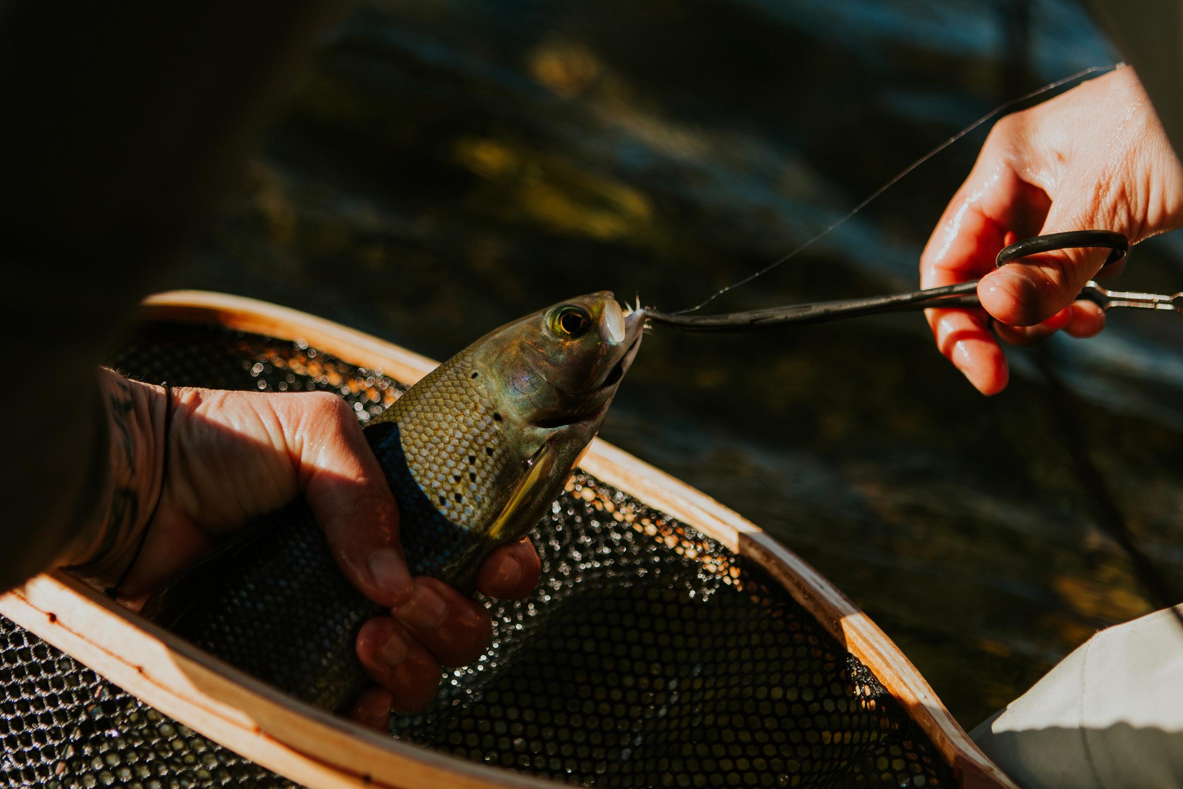 CindyGiovagnoli_Alaska_KoyukukRiver_SukakpakMountain_JimRiver_ArcticCircle_fly_fishing_September-069.jpg