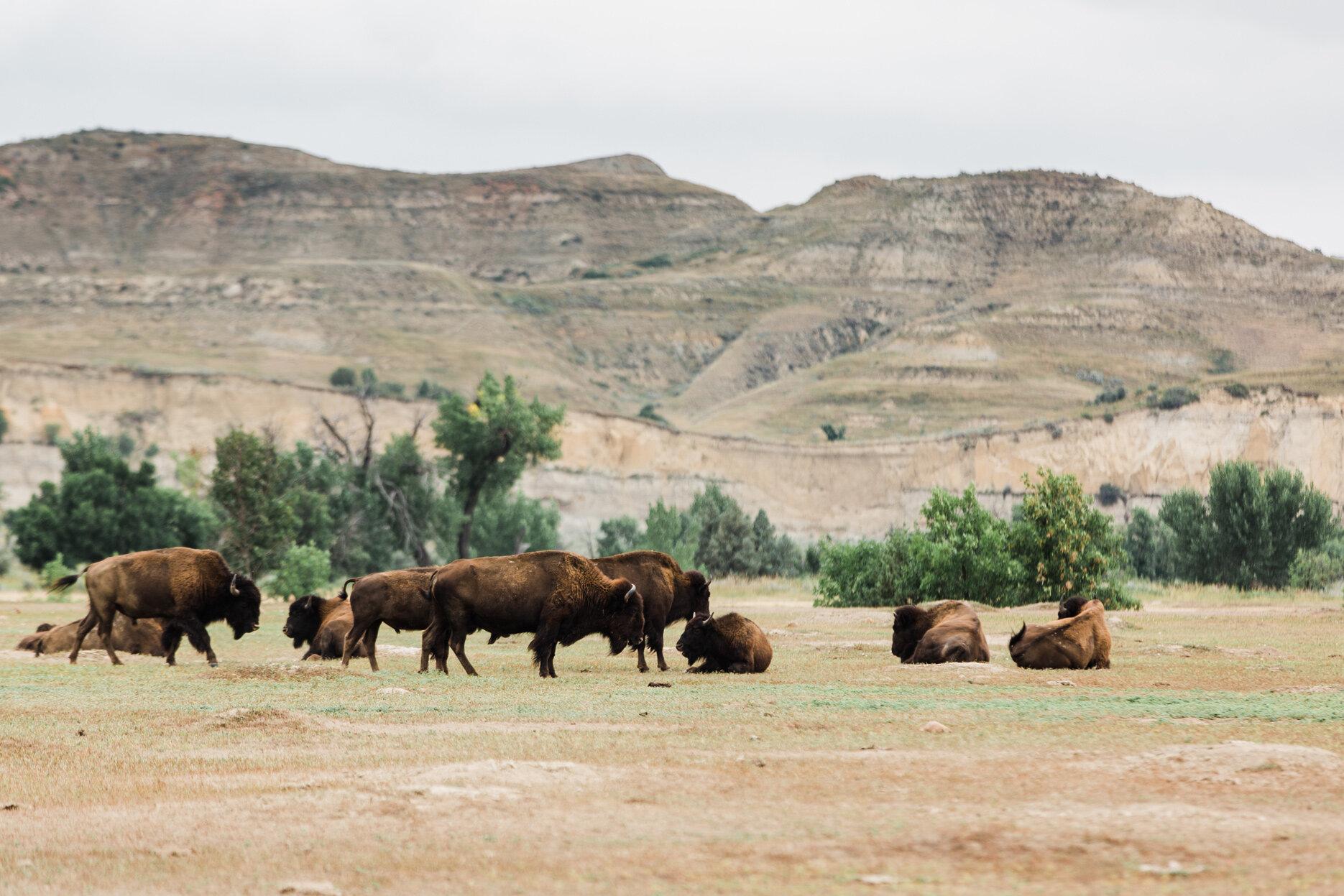CindyGiovagnoli_Theadore_Roosevelt_National_Park_Glacier_North_Dakota_Montana-002.jpg