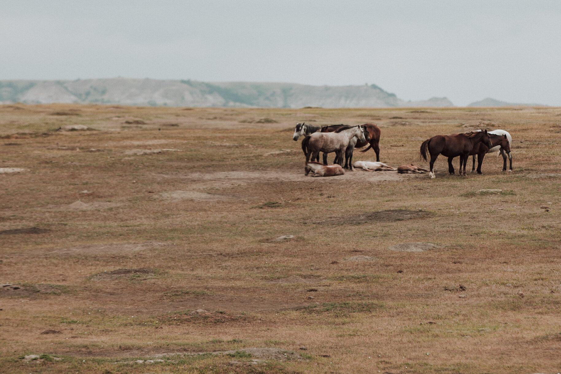 CindyGiovagnoli_Theadore_Roosevelt_National_Park_Glacier_North_Dakota_Montana-004.jpg