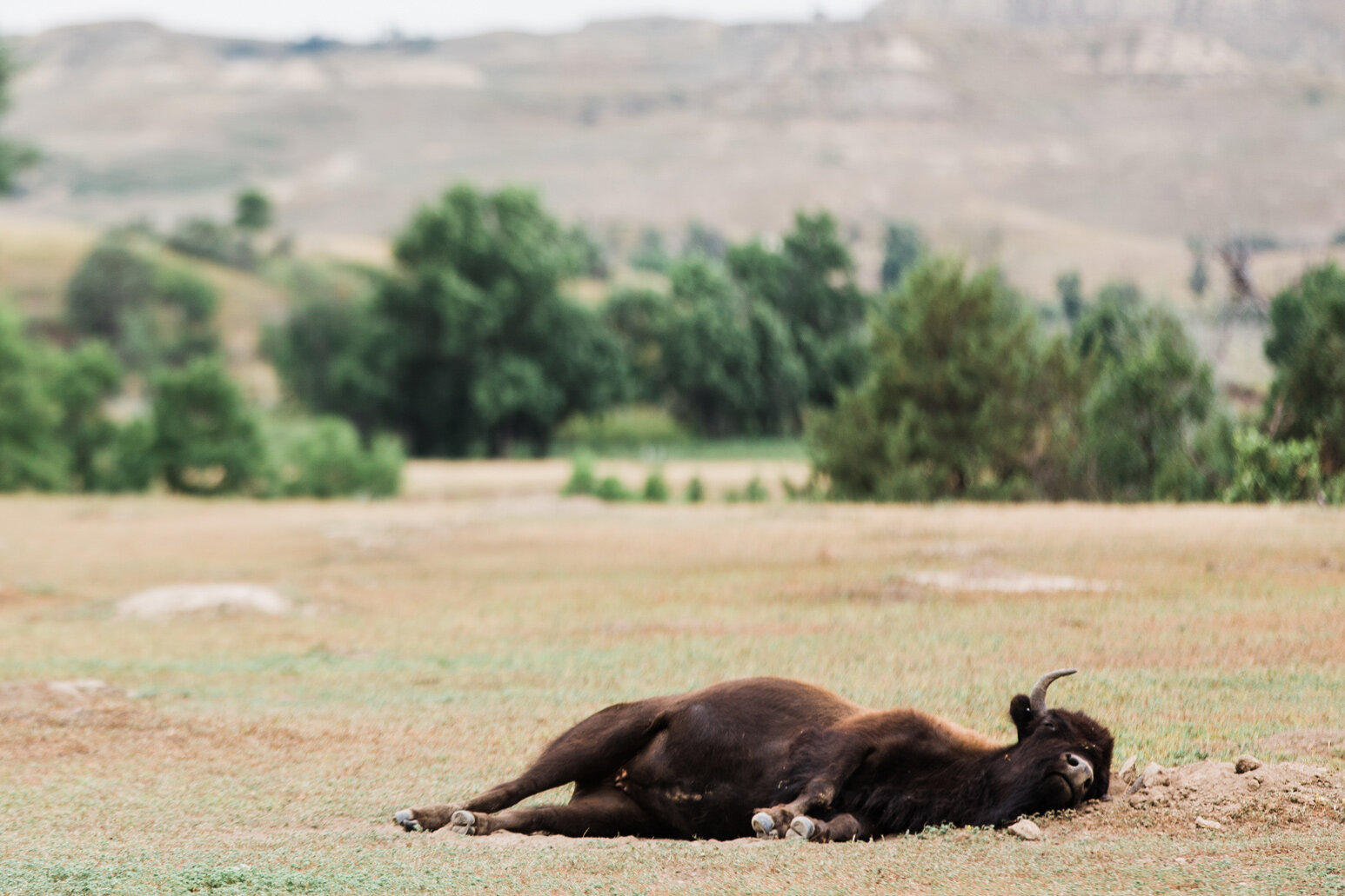 CindyGiovagnoli_Theadore_Roosevelt_National_Park_Glacier_North_Dakota_Montana-008.jpg