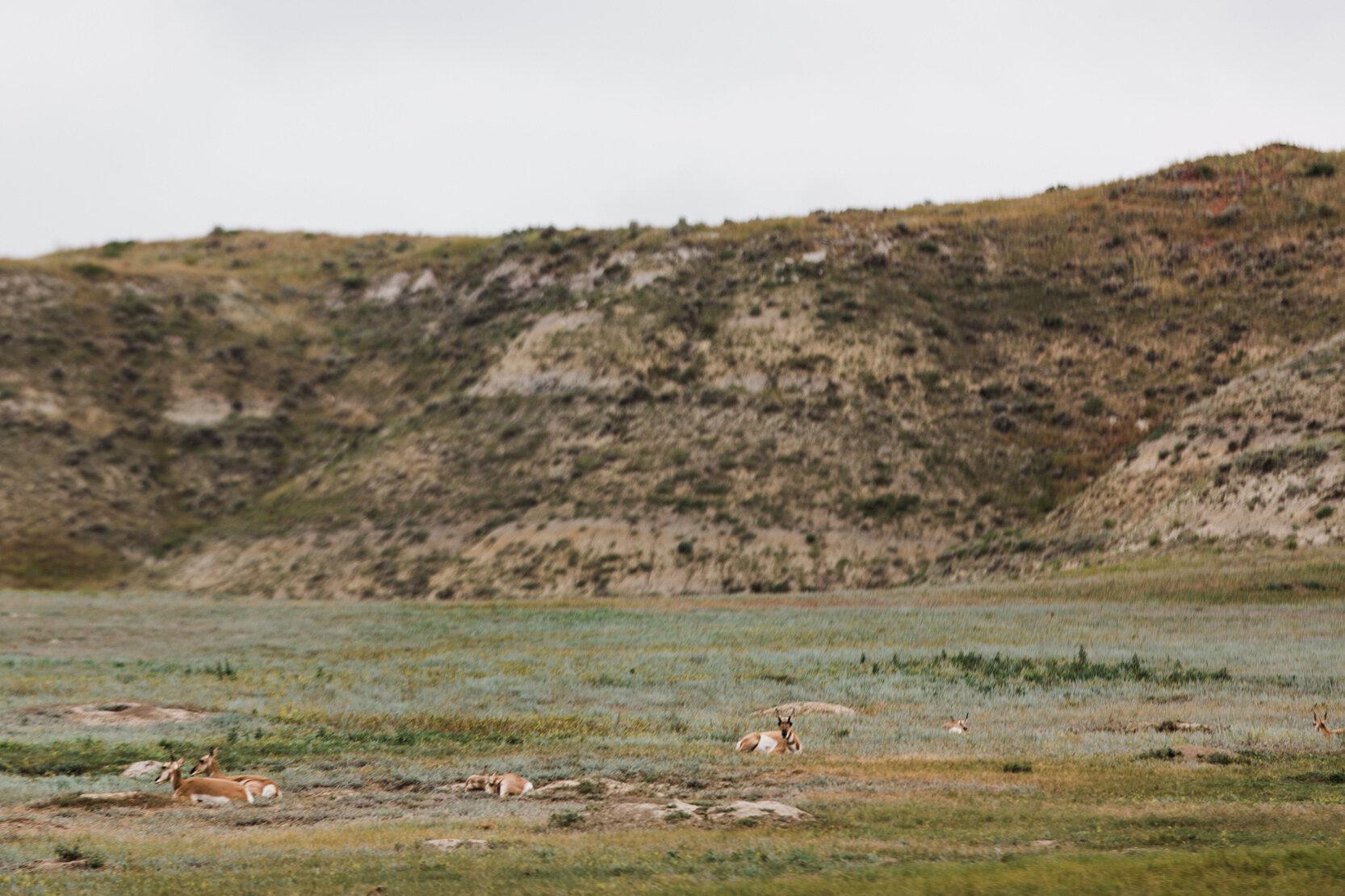 CindyGiovagnoli_Theadore_Roosevelt_National_Park_Glacier_North_Dakota_Montana-010.jpg